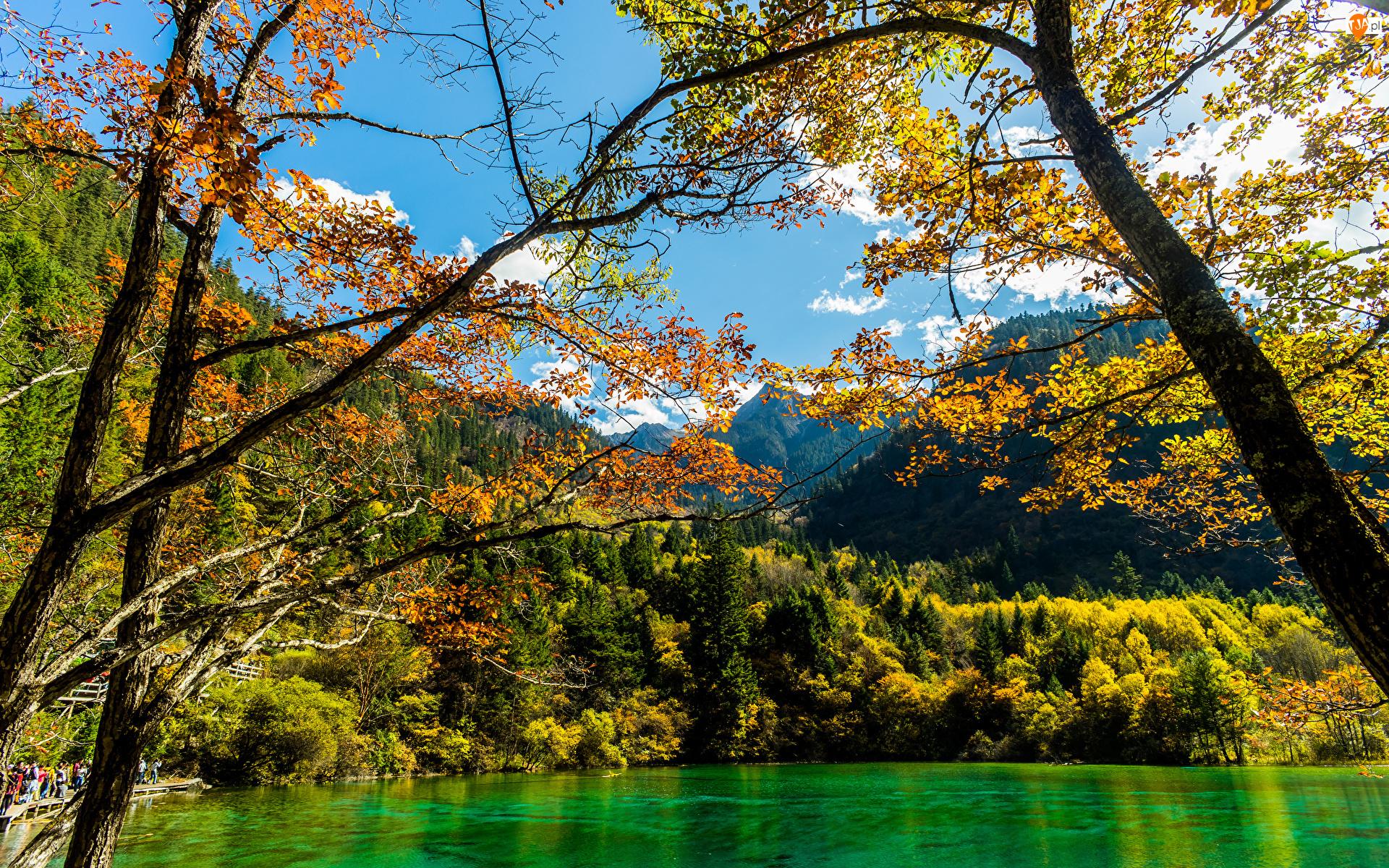 Las, Jesień, Gałęzie, Góry, Drzewa, Jezioro