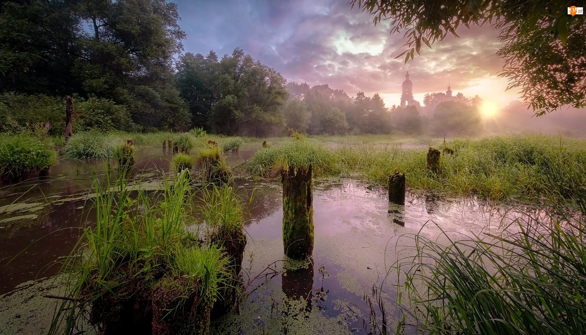 Drzewa, Rzeka, Wschód słońca, Cerkiew, Trawa, Kołki