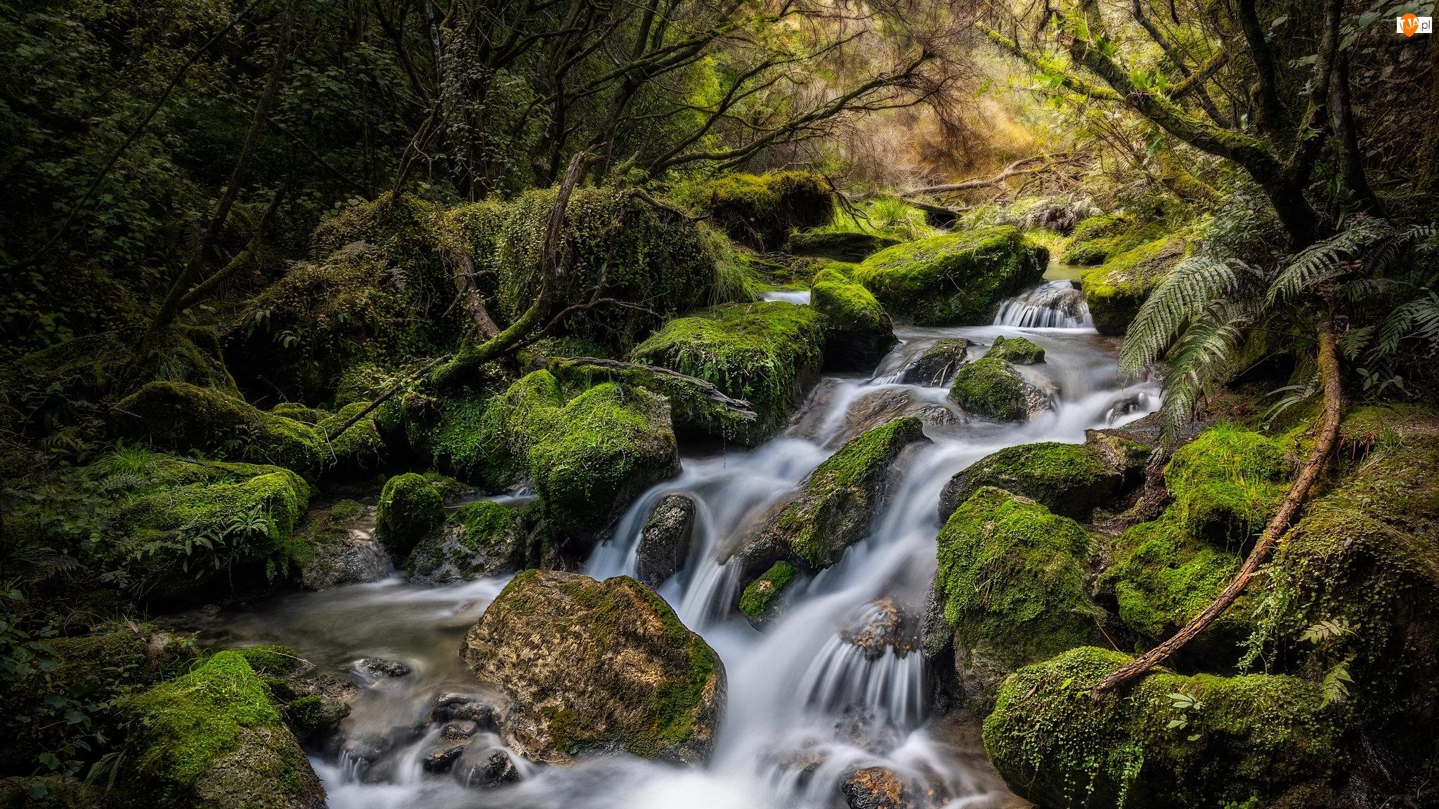 Rośliny, Rzeka, Omszałe, Tangoio, Potok, Kamienie, Nowa Zelandia, Las
