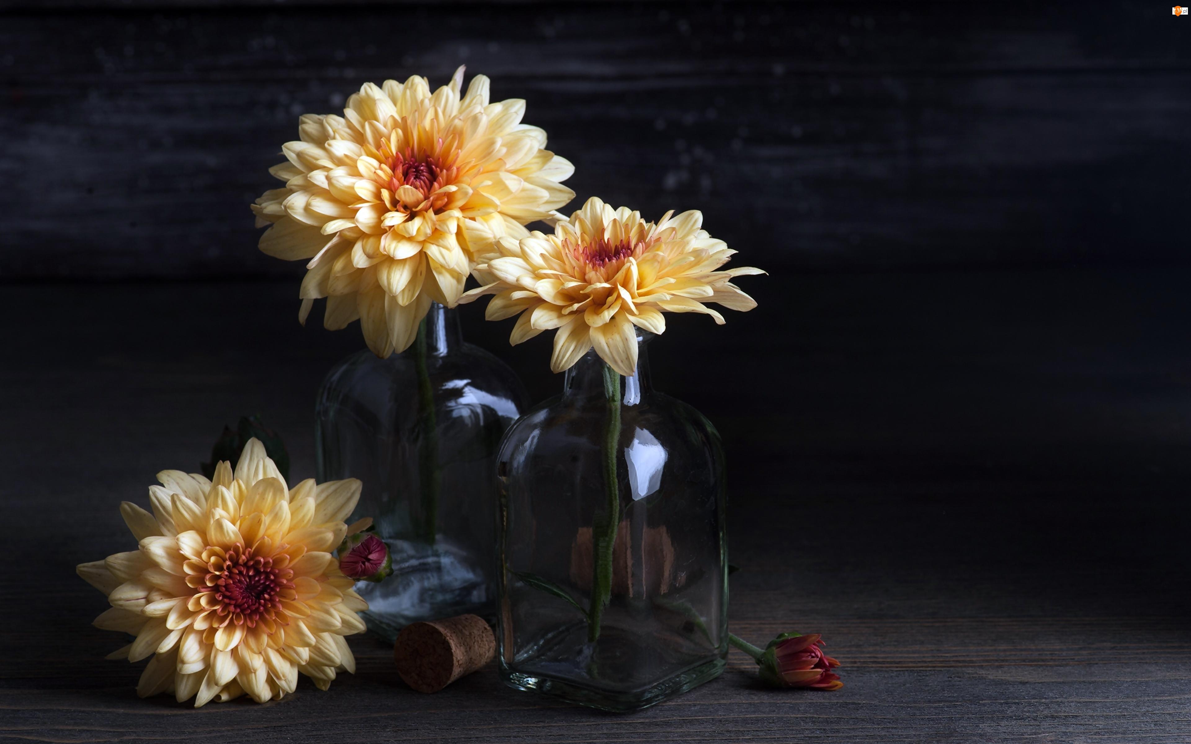Butelki, Kwiaty, Chryzantemy