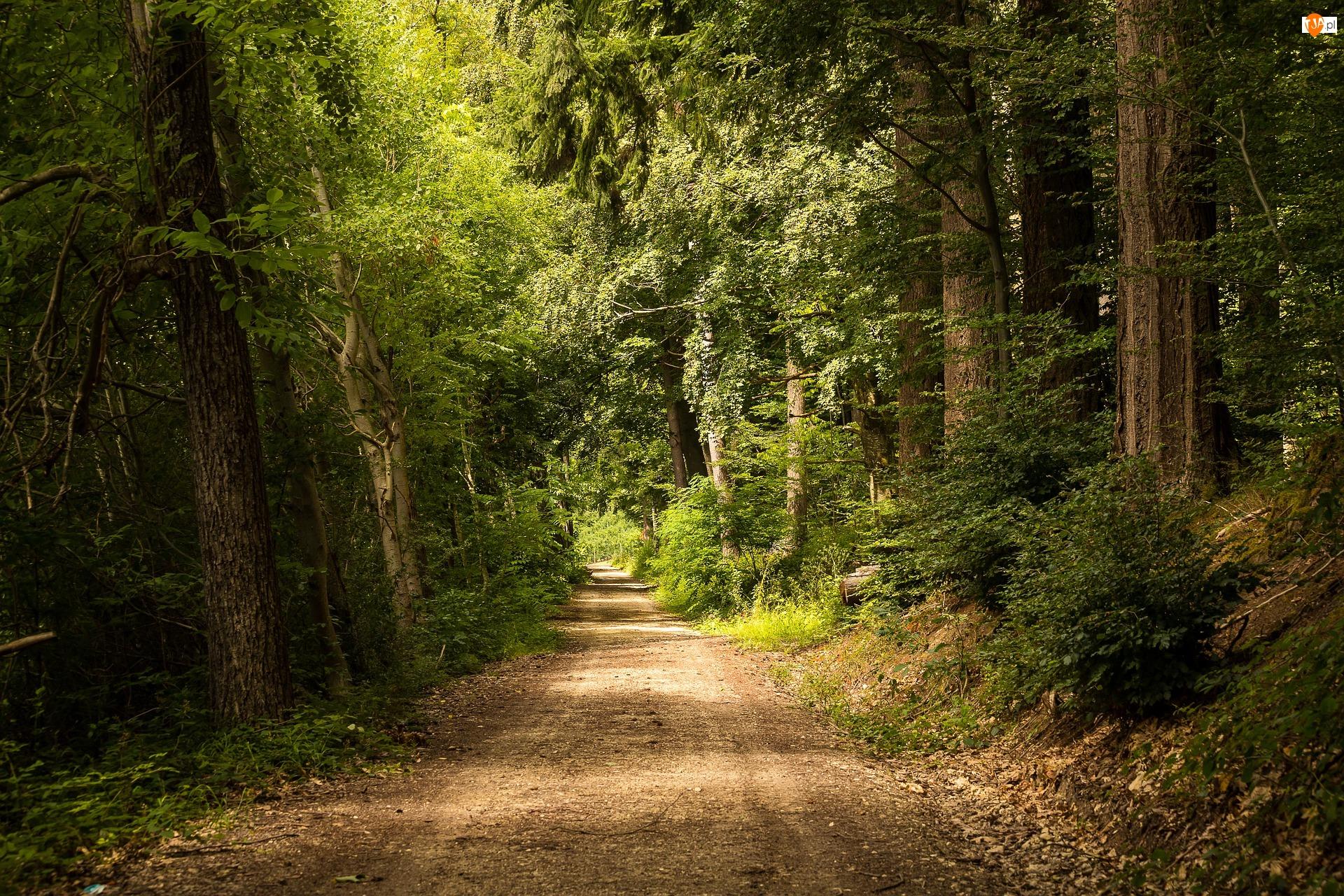 Drzewa, Ścieżka, Liściasty, Las, Droga