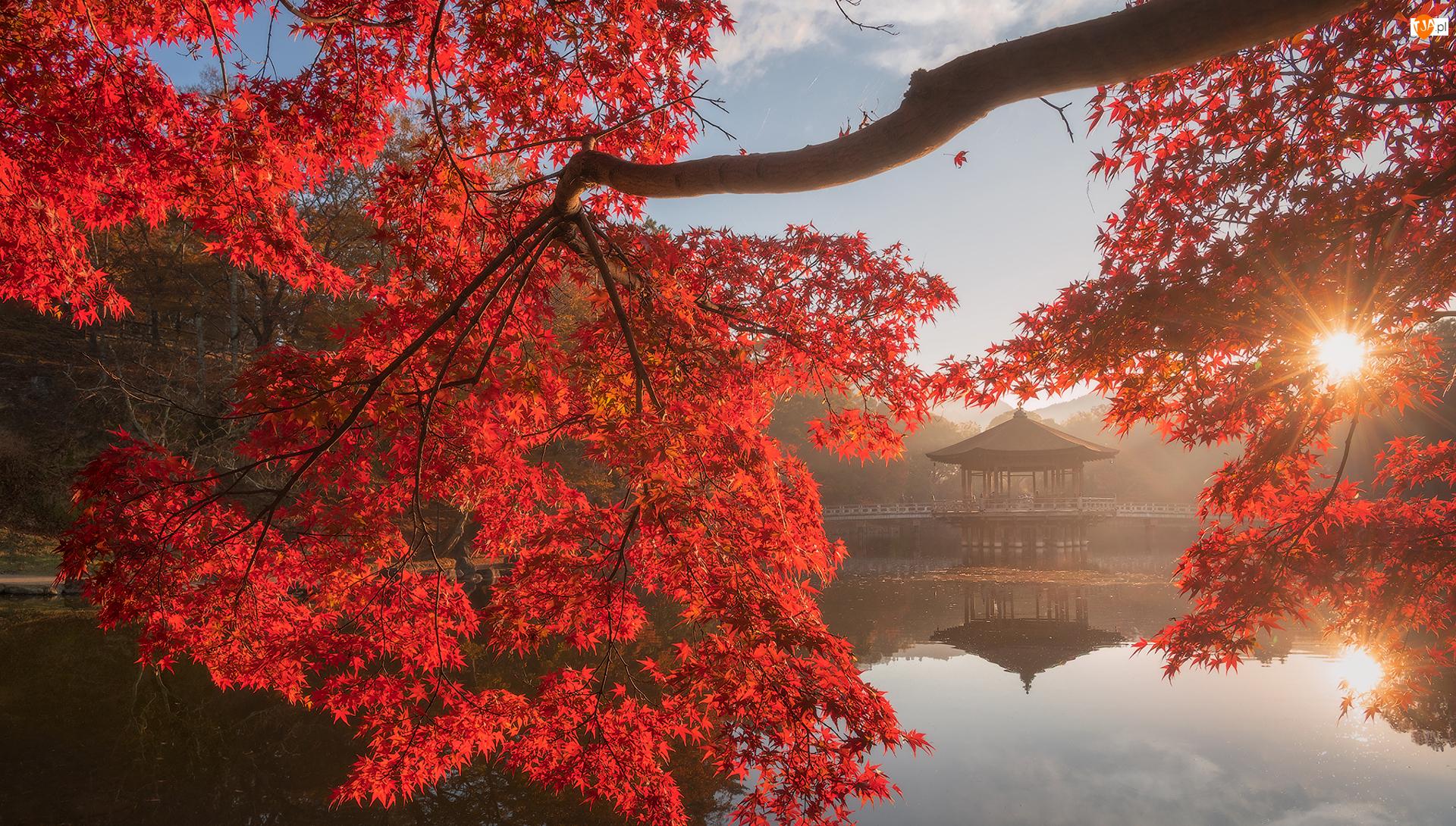 Pawilon Ukimido, Jesień, Promienie słońca, Altana, Nara, Czerwone, Staw, Sagiike, Nara Park, Liście, Japonia, Gałęzie, Drzewo