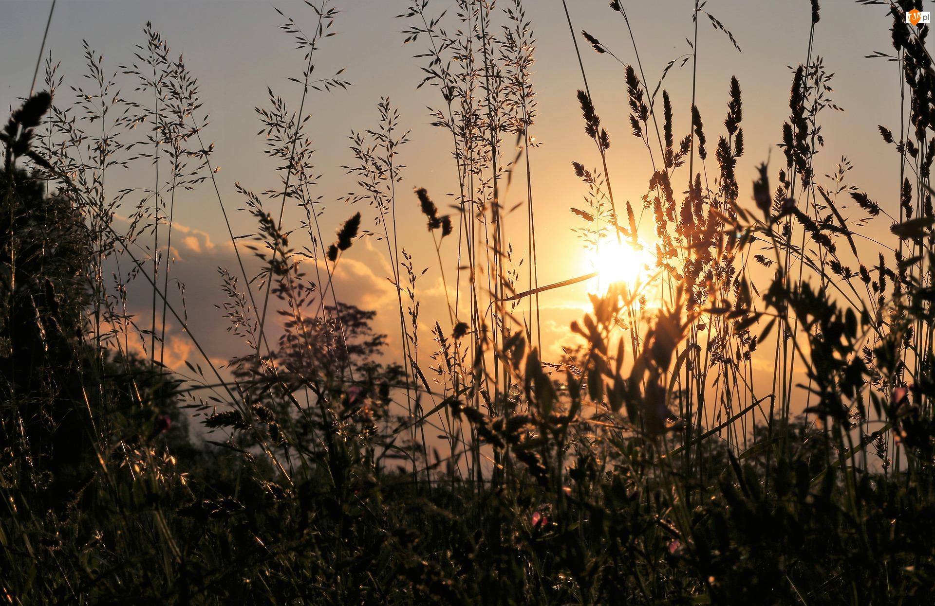 Światło, Słońce, Trawa