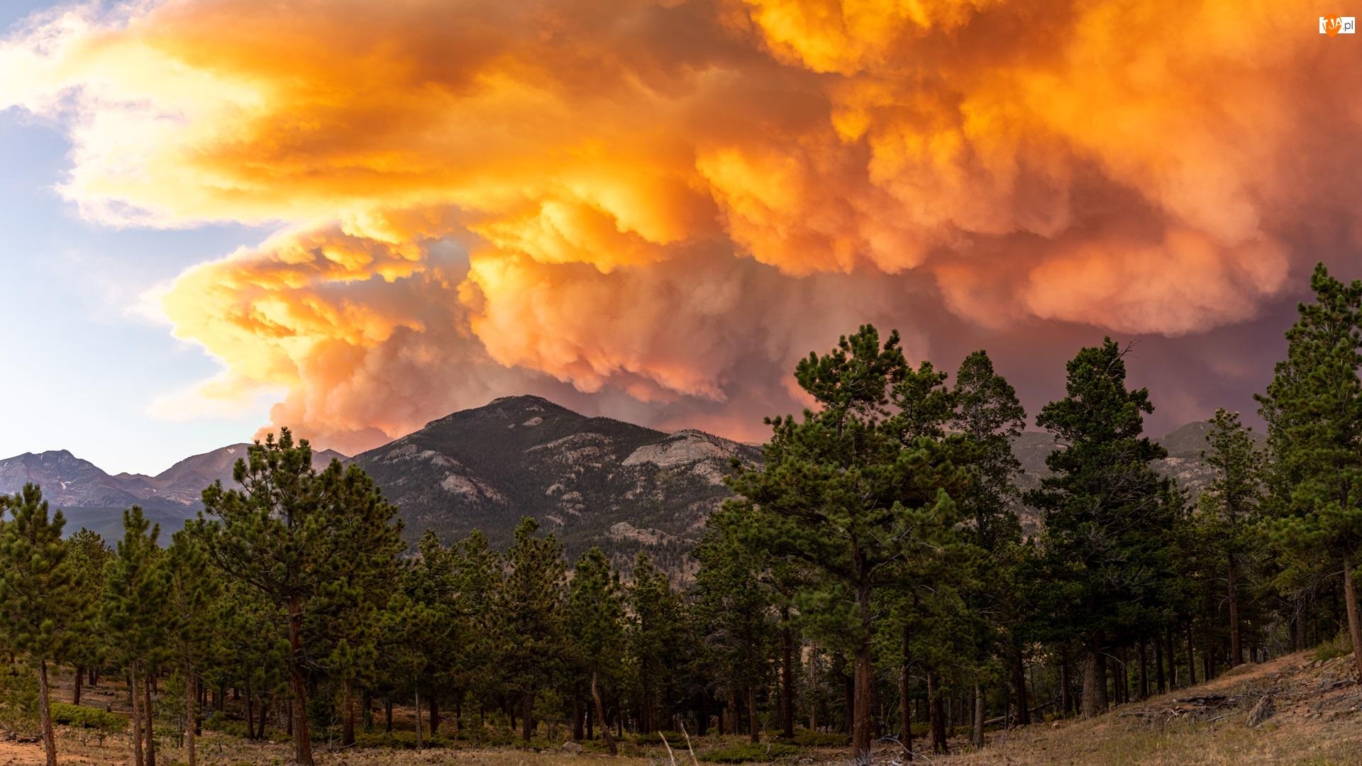 Chmury, Góry, Drzewa iglaste