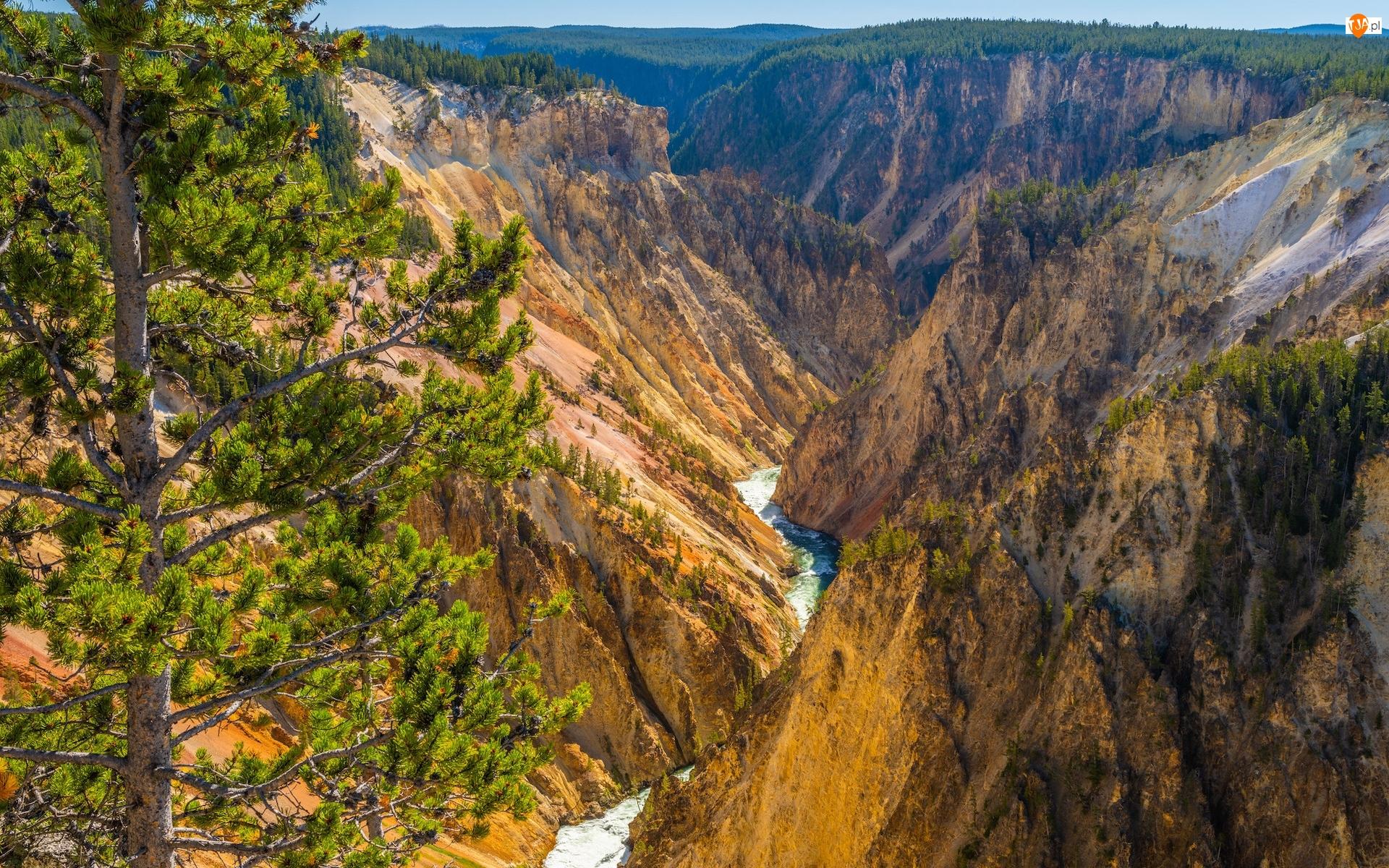 Stany Zjednoczone, Wąwóz, Stan Wyoming, Drzewo, Park Narodowy Yellowstone, Wielki Kanion Yellowstone, Rzeka, Góry, Yellowstone River