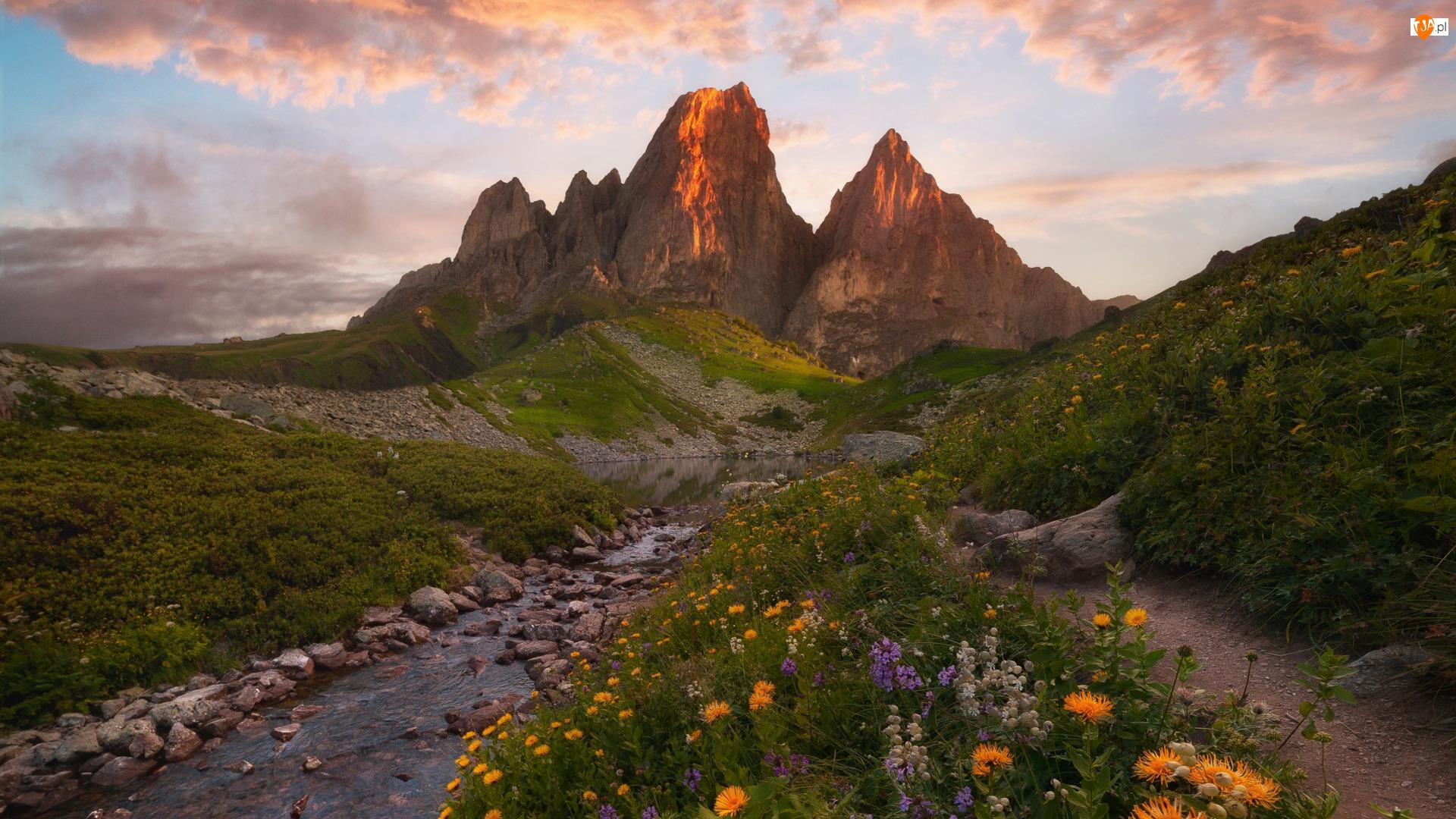 Góry, Tsey Loam, Rosja, Kaukaz Północny, Inguszetia, Kwiaty, Strumień