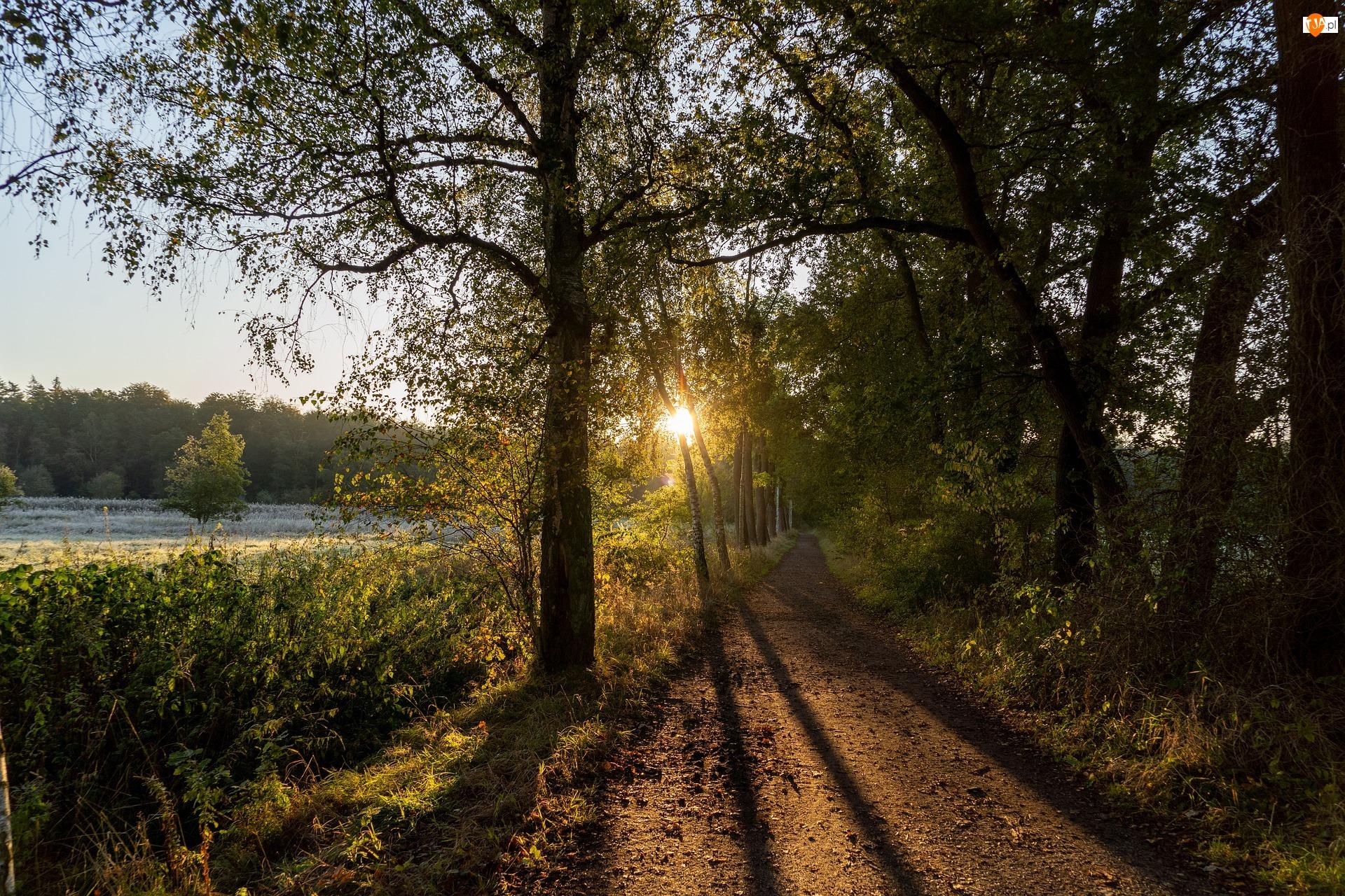 Droga, Łąka, Wschód słońca, Drzewa, Cienie