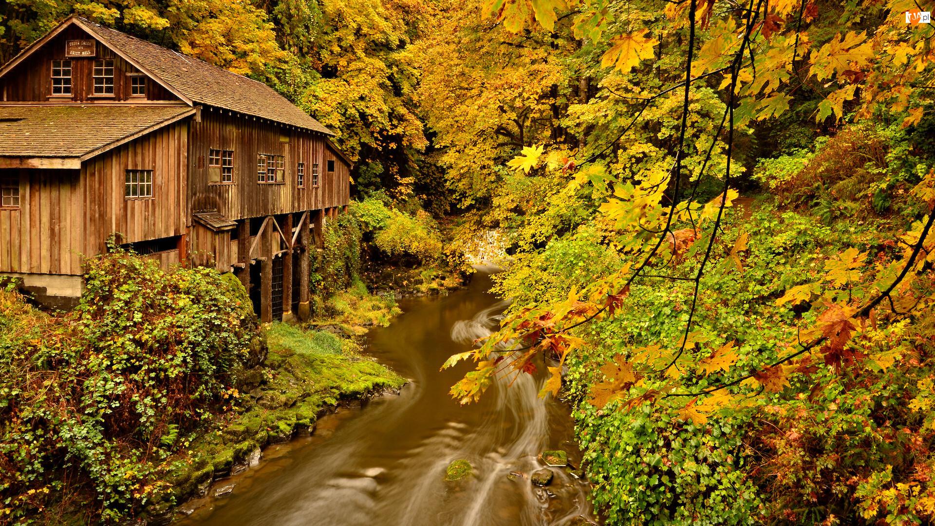 Stany Zjednoczone, Jesień, Woodland, Las, Cedar Creek Grist Mill, Młyn, Lewis River, Rzeka, Drzewa, Stan Waszyngton