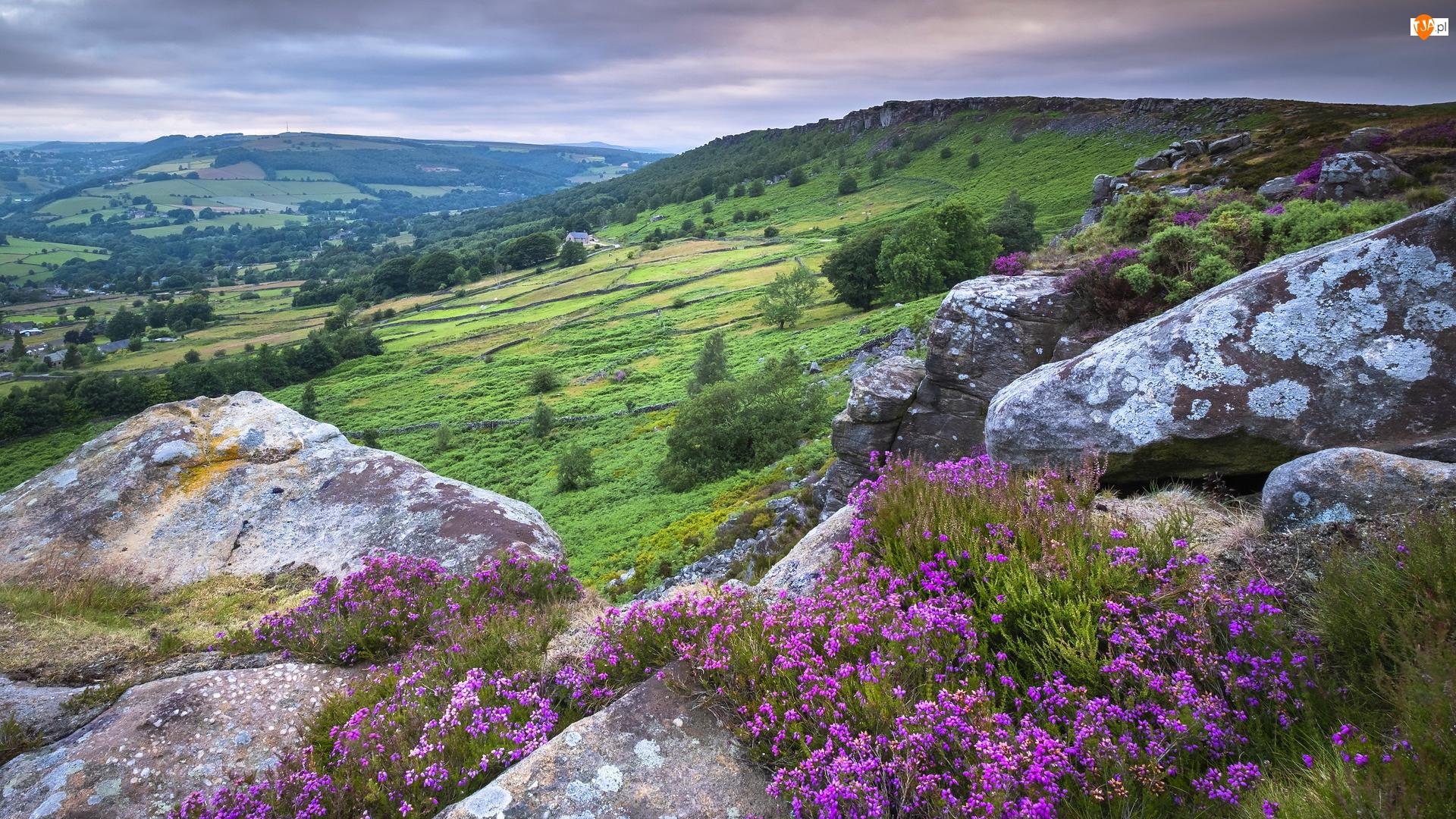 Wzgórza, Anglia, Wrzosy, Skały, Park Narodowy Peak District