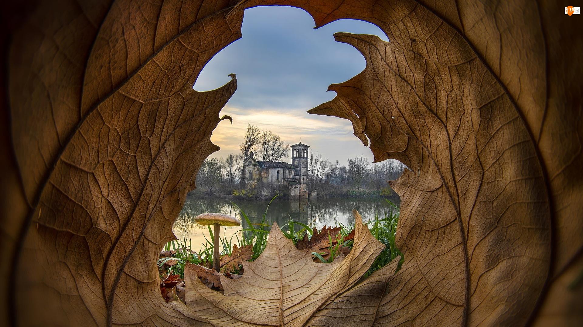 Ruina, Grzyb, Budynek, Liść, Jezioro