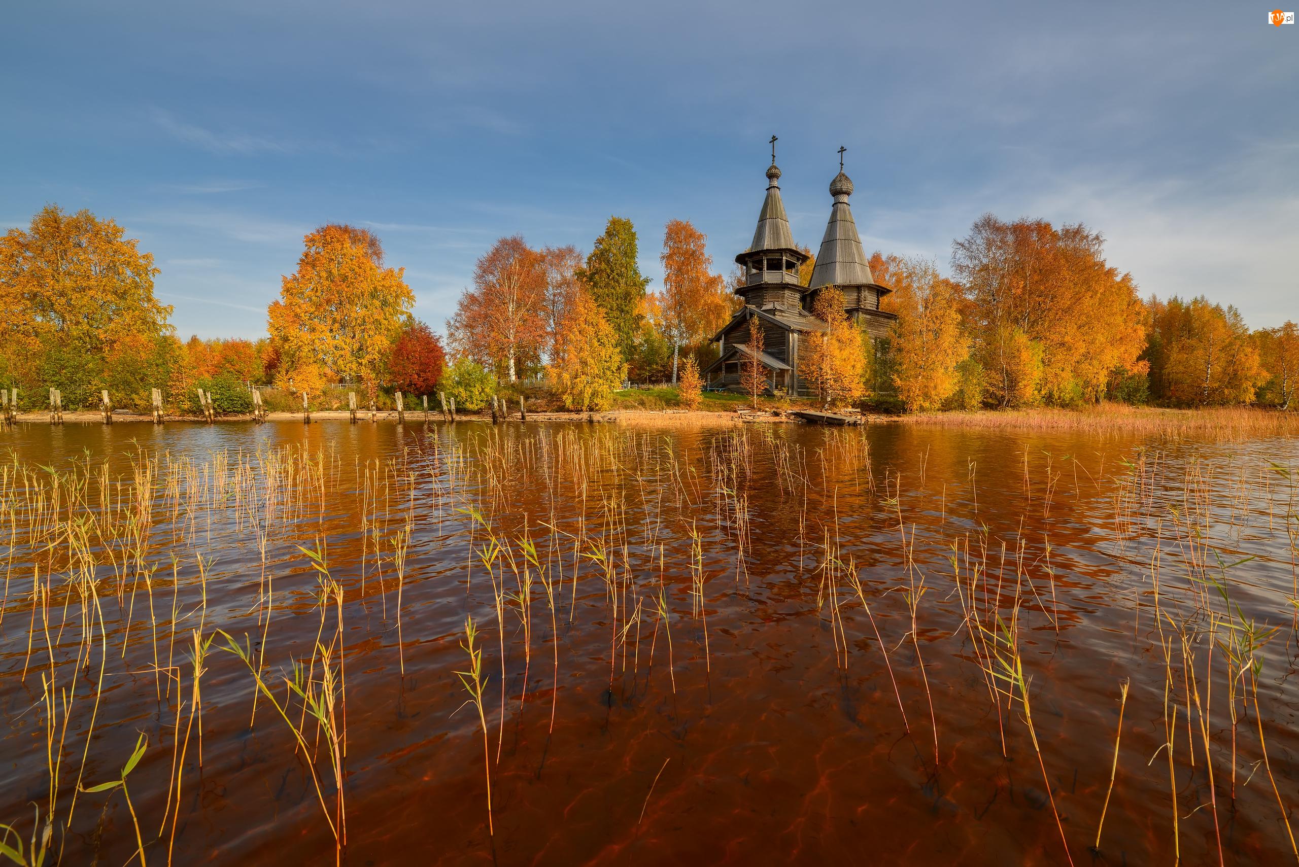Rosja, Jezioro, Republika Karelia, Szuwary, Wieś Chelmuzhi, Cerkiew, Drzewa, Jesień, Roślinność