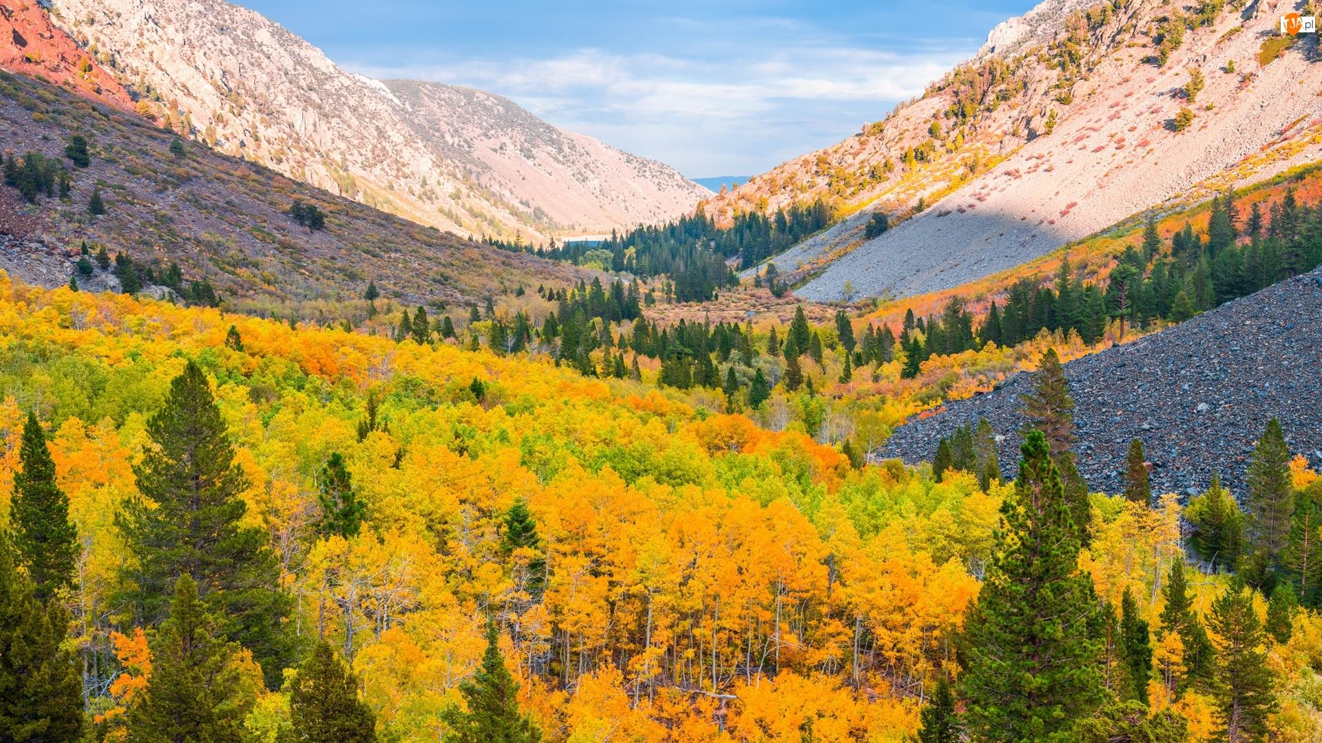Lundy Canyon, Góry, Jesień, Kalifornia, Drzewa, Wąwóz, Stany Zjednoczone, Lasy