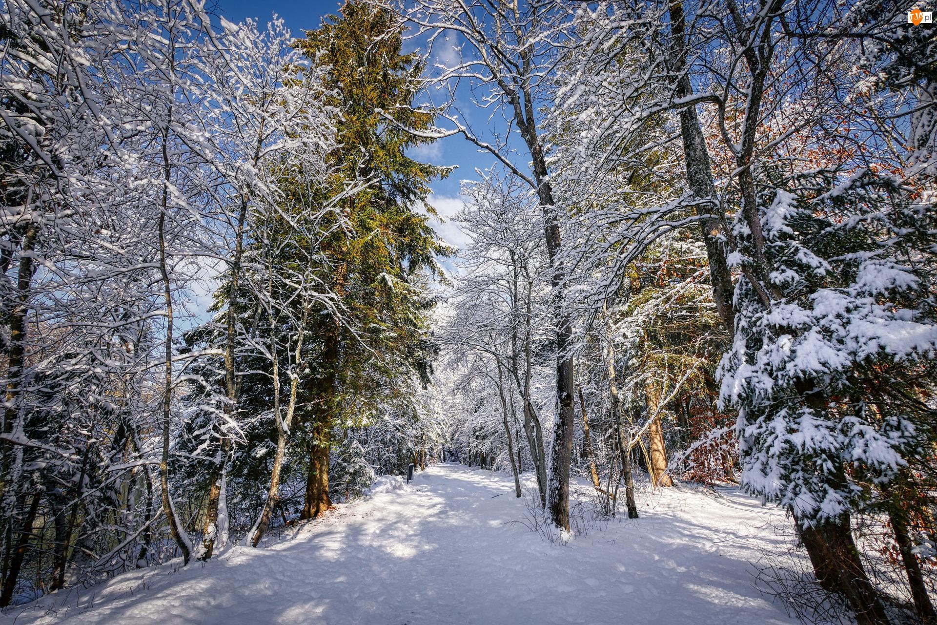 Śnieg, Zima, Drzewa, Las, Gałęzie