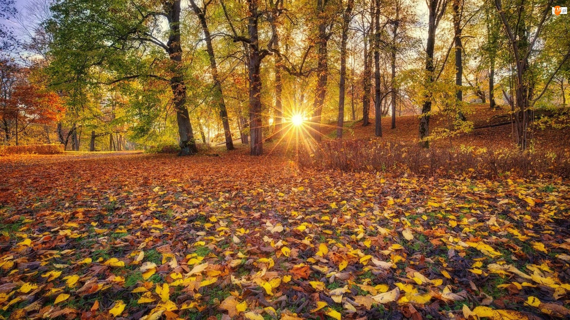 Drzewa, Park, Promienie słońca, Jesień, Liście