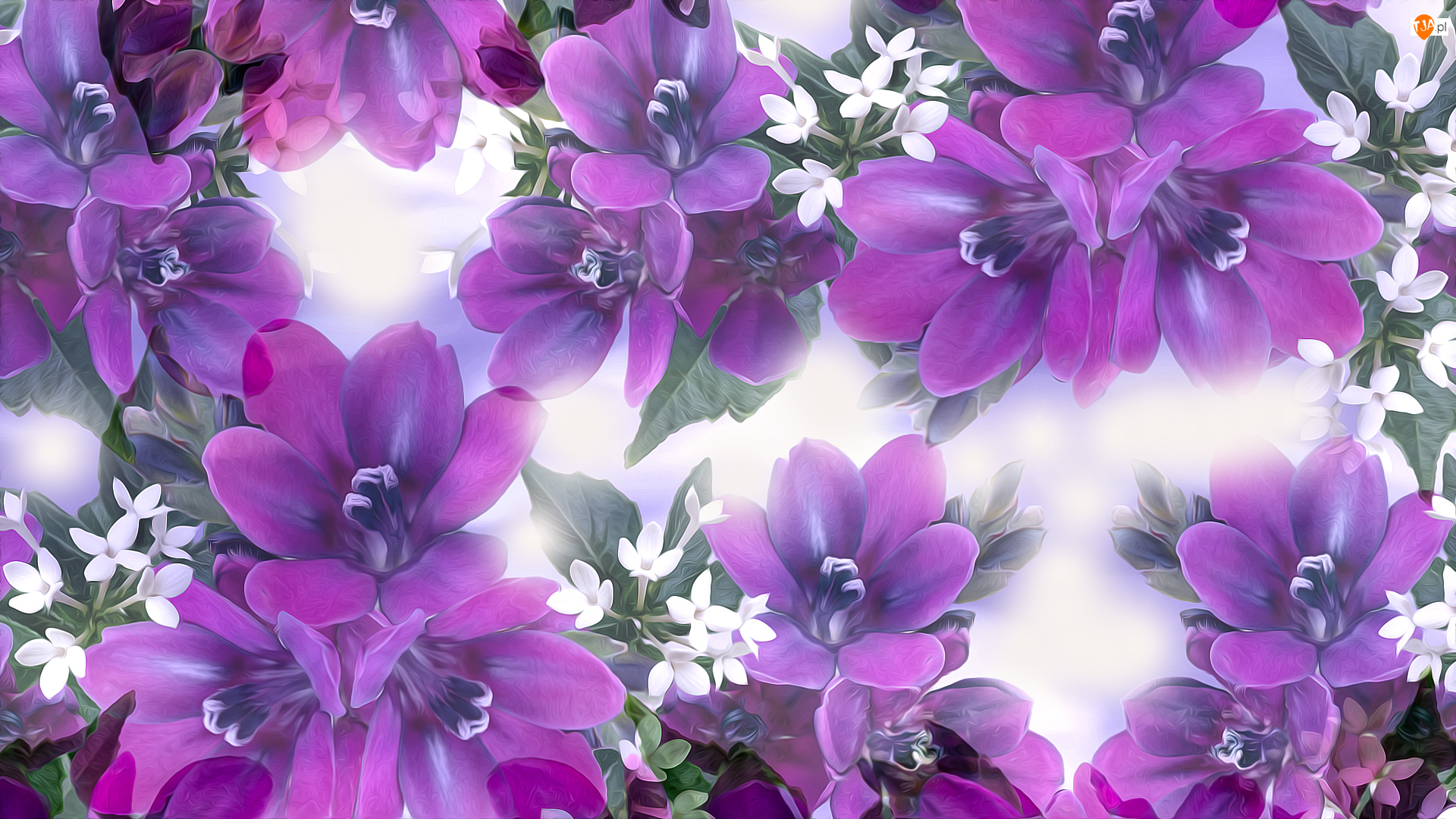 Grafika, Fioletowe, Przymglone, Kwiaty