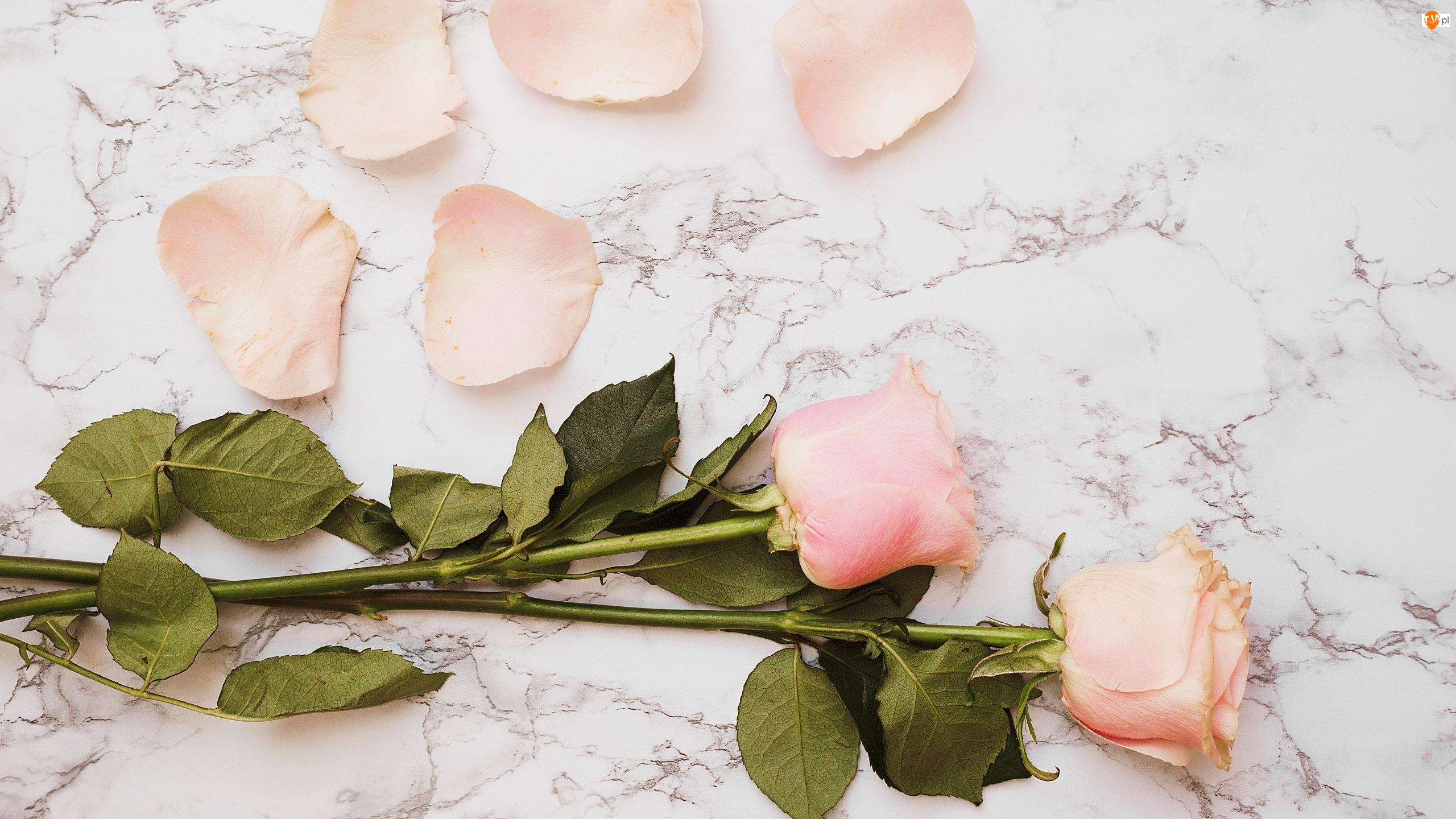 Płatki, Tło, Róże, Dwie, Marmurowe