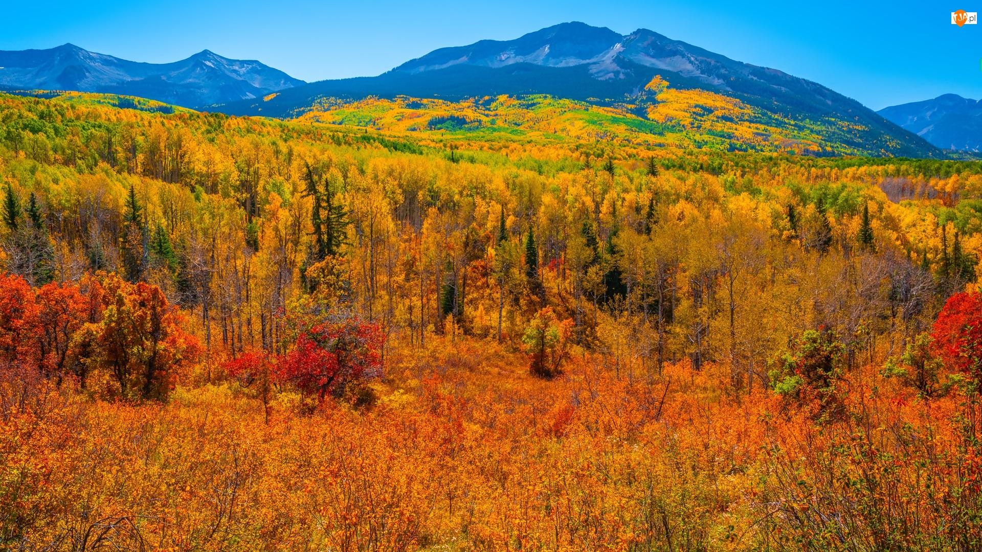 Jesień, Kolorado, Lasy, Drzewa, Roślinność, Przełęcz, Kebler Pass, Stany Zjednoczone, Góry