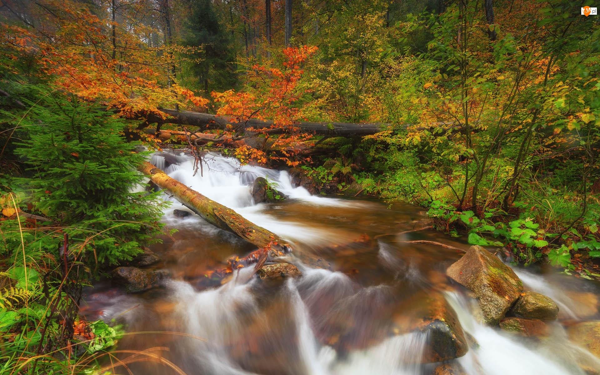 Drzewa, Kamienie, Rzeka, Las, Jesień