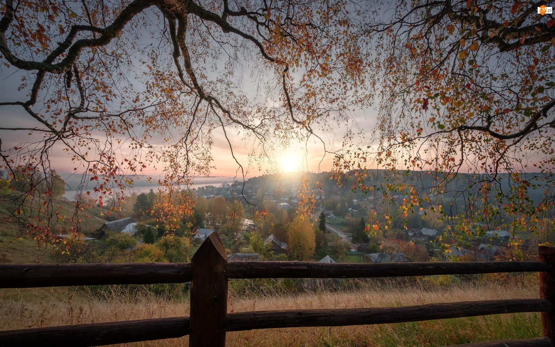 Plos, Domy, Brzozy, Obwód iwanowski, Ogrodzenie, Wschód słońca, Rosja, Drzewa