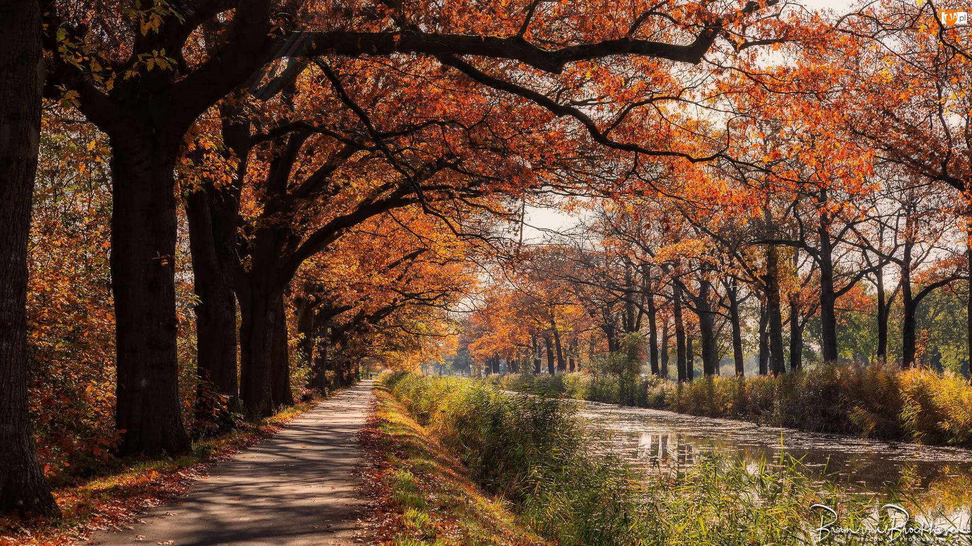 Ścieżka, Kanał, Drzewa, Jesień, Rzeka