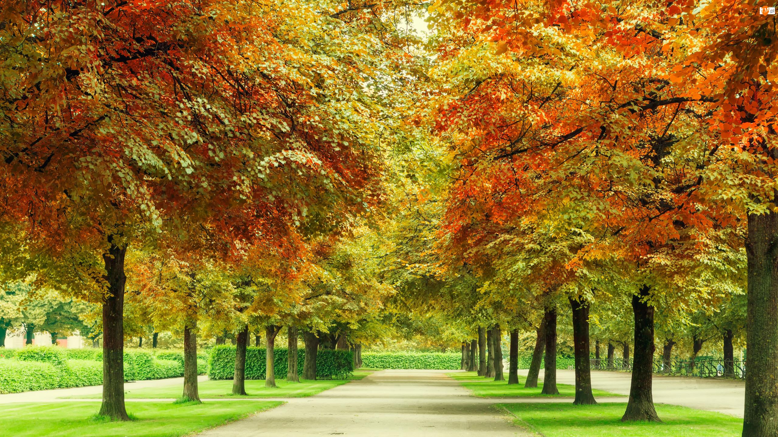 Park, Jesień, Drzewa, Liście, Alejka, Kolorowe