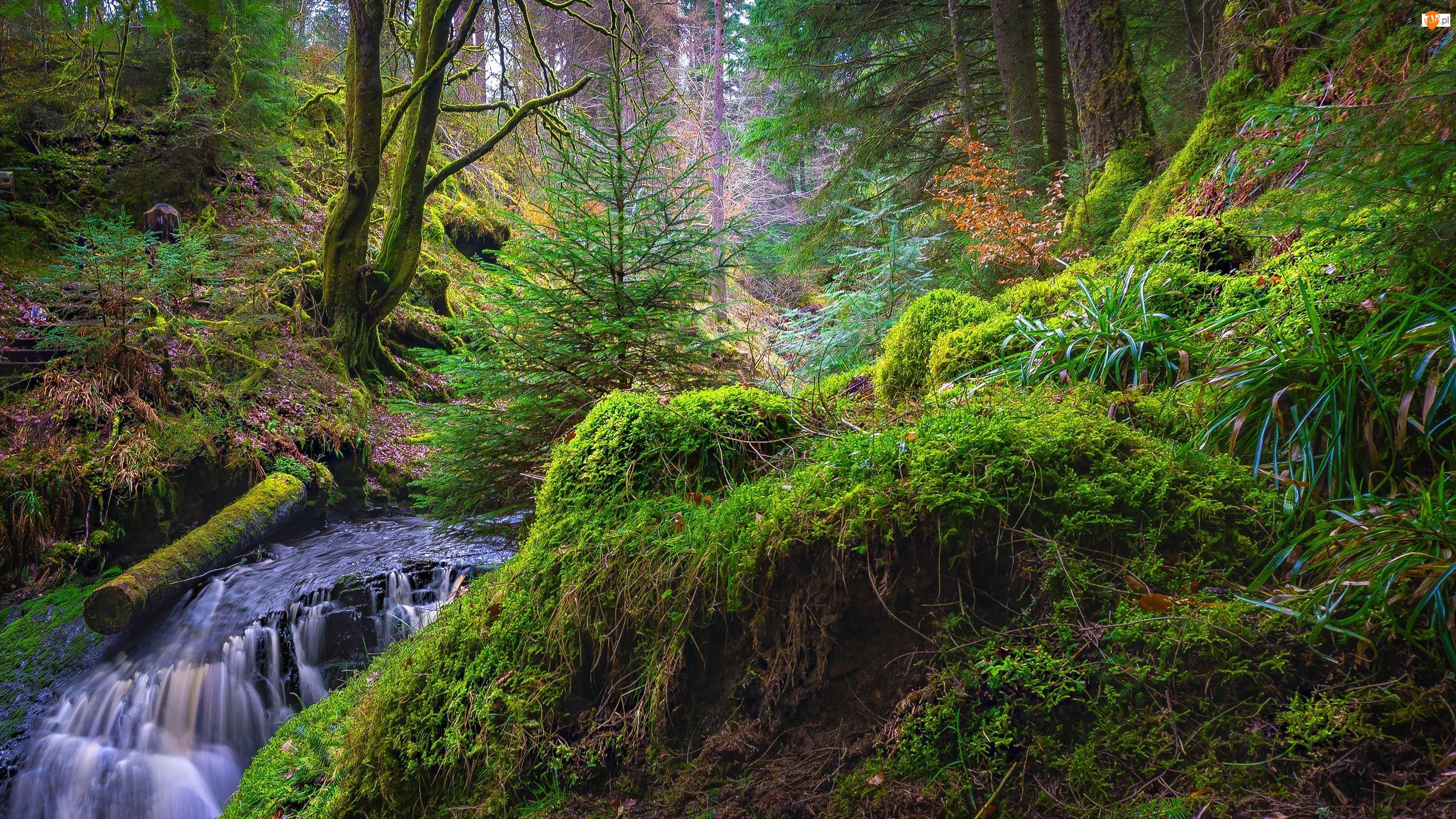 Drzewa, Rośliny, Rzeka, Las, Zielone