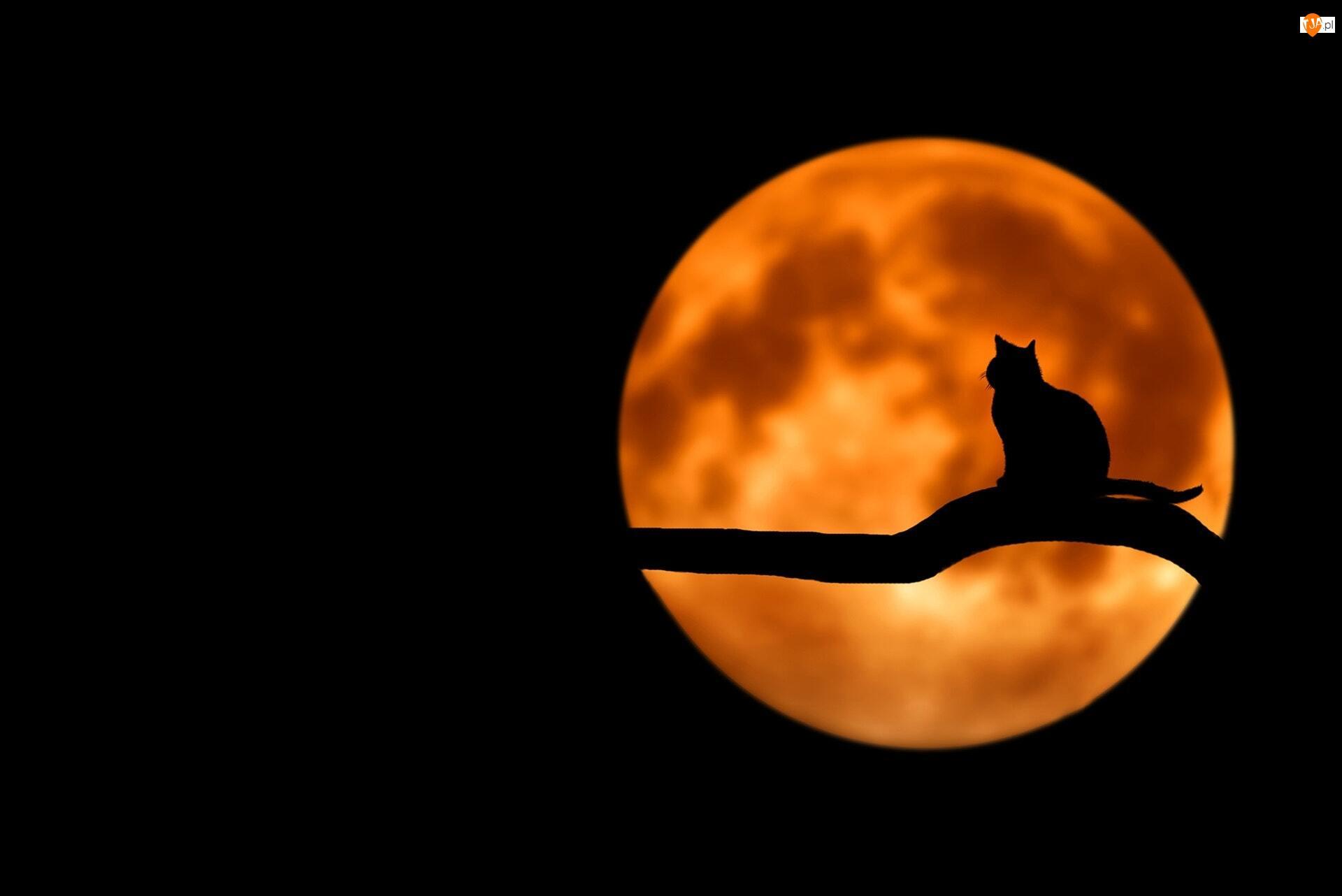 2D, Księżyc, Kot, Gałąź