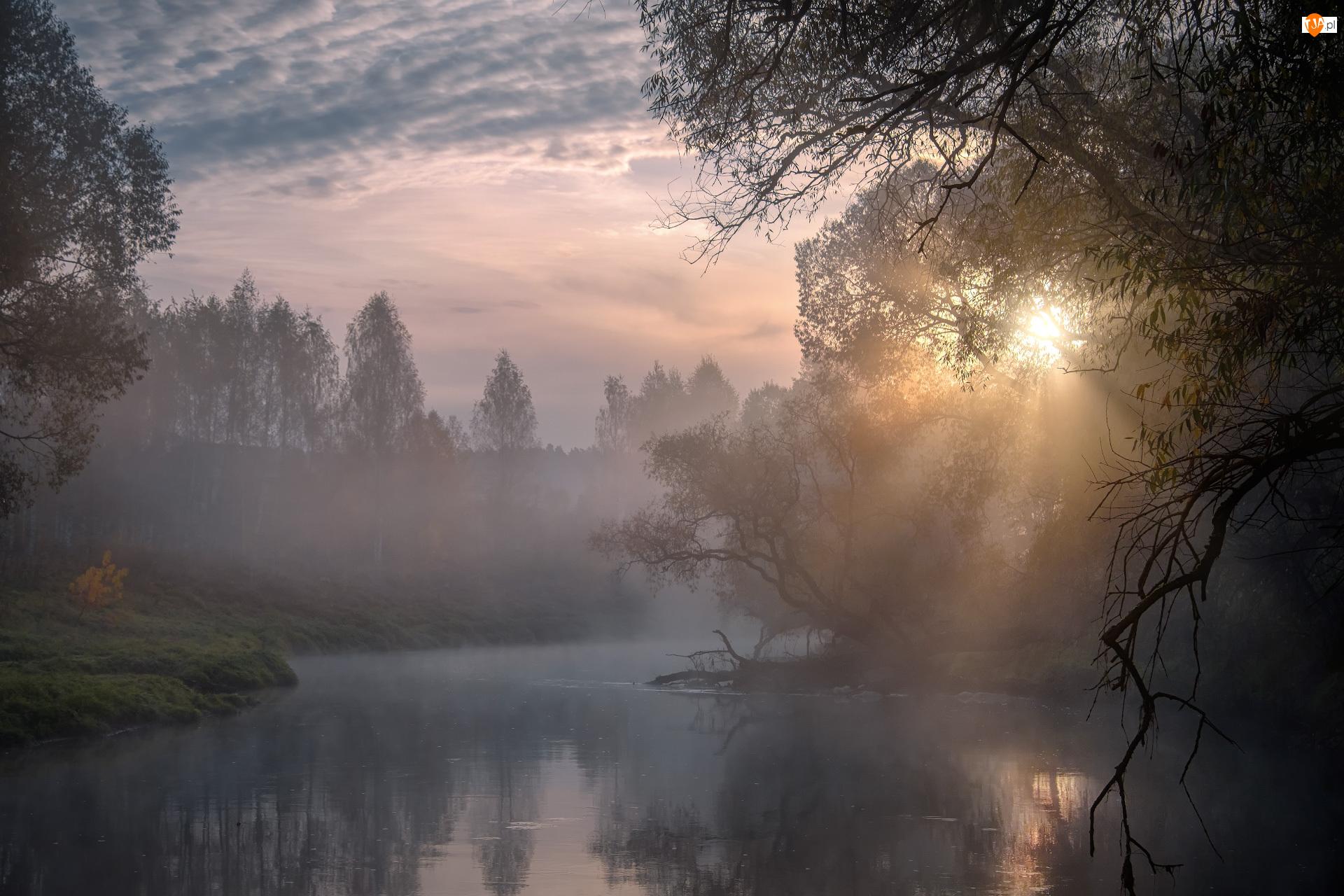 Przebijające światło, Mgła, Rosja, Wschód słońca, Obwód moskiewski, Drzewa, Rzeka Istra