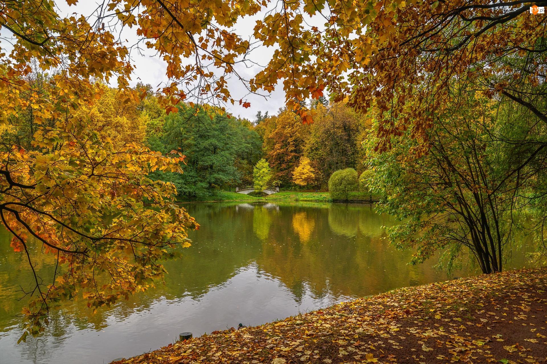 Staw, Drzewa, Jesień, Park, Chmury, Most, Liście