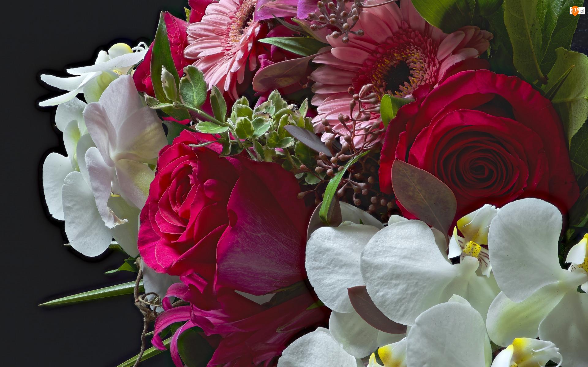 Róże, Gerbera, Bukiet, Kwiaty, Orchidea