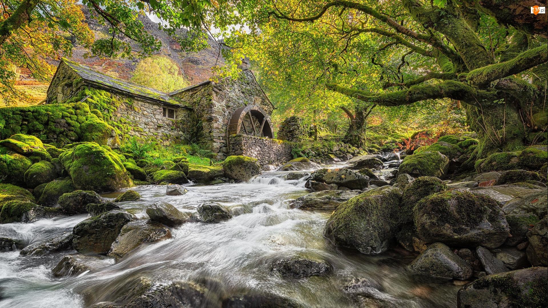 Drzewa, Hrabstwo Kumbria, Kamienie, Rzeka, Omszałe, Borrowdale, Kamienny, Anglia, Młyn