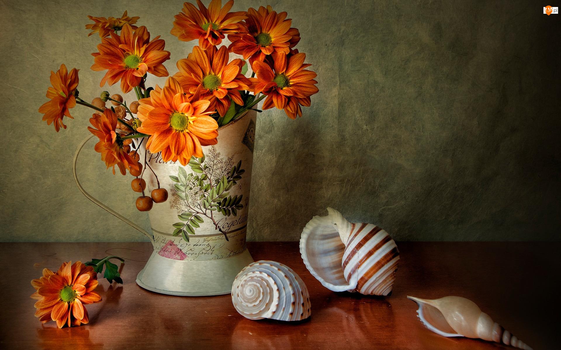 Muszle, Kwiaty, Chryzantemy, Wazon