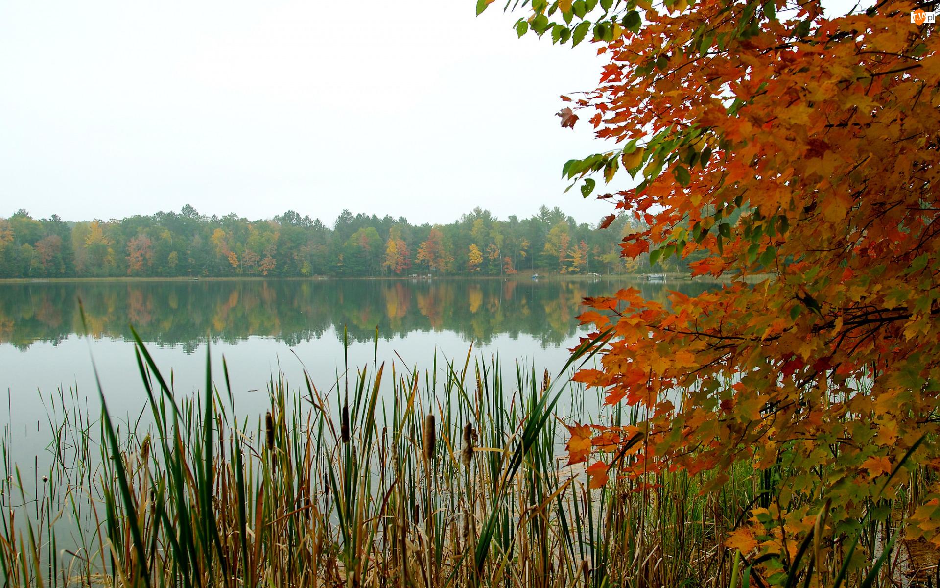 Drzewo, Kolorowe, Liście, Tatarak, Gałęzie, Jezioro