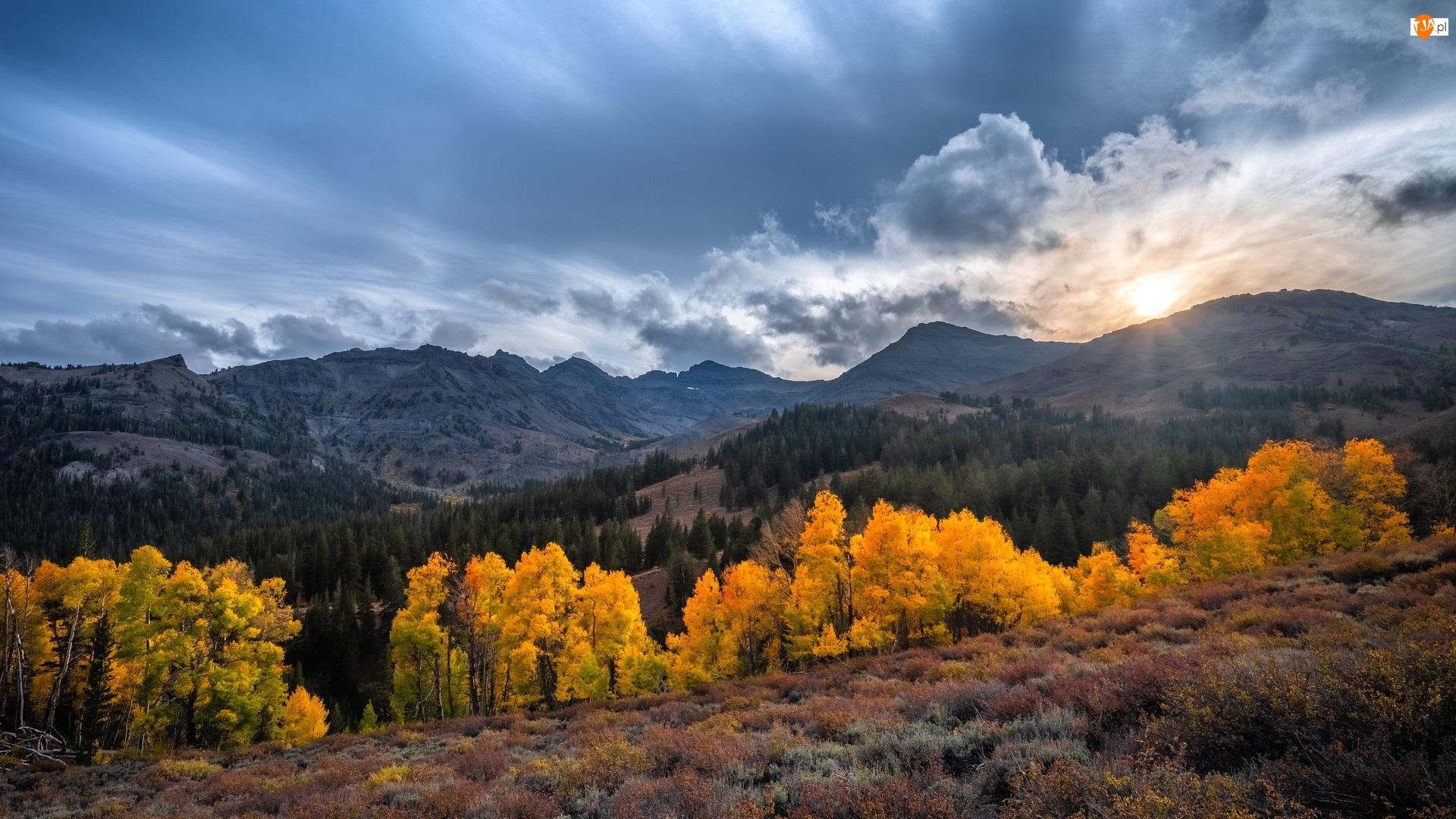 Sonora Pass, Góry, Eastern Sierra, Stany Zjednoczone, Kalifornia, Drzewa, Słońce, Jesień, Rośliny