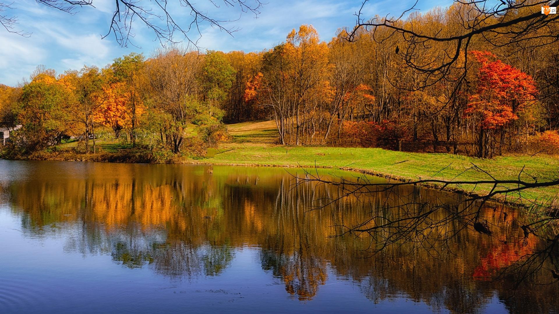 Pożółkłe, Jesień, Staw, Park, Drzewa