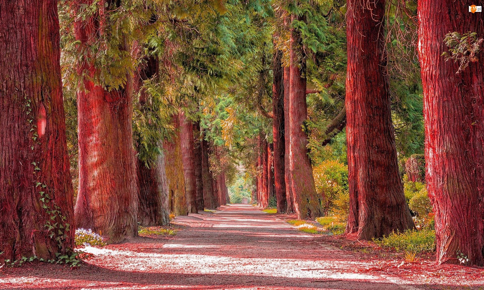 Drzewa, Jesień, Pnie, Aleja, Czerwone, Droga