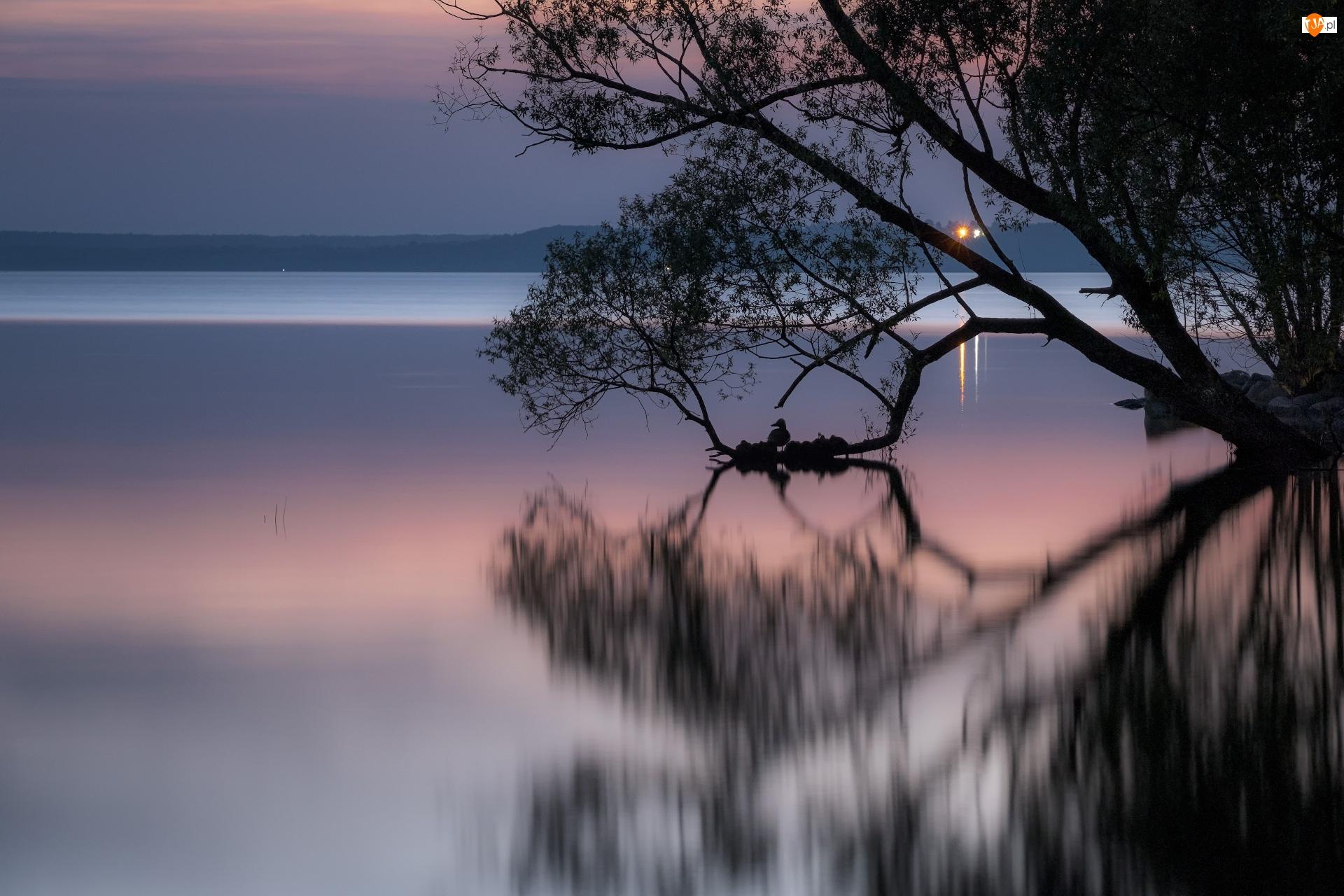 Odbicie, Jezioro, Drzewo, Wieczór