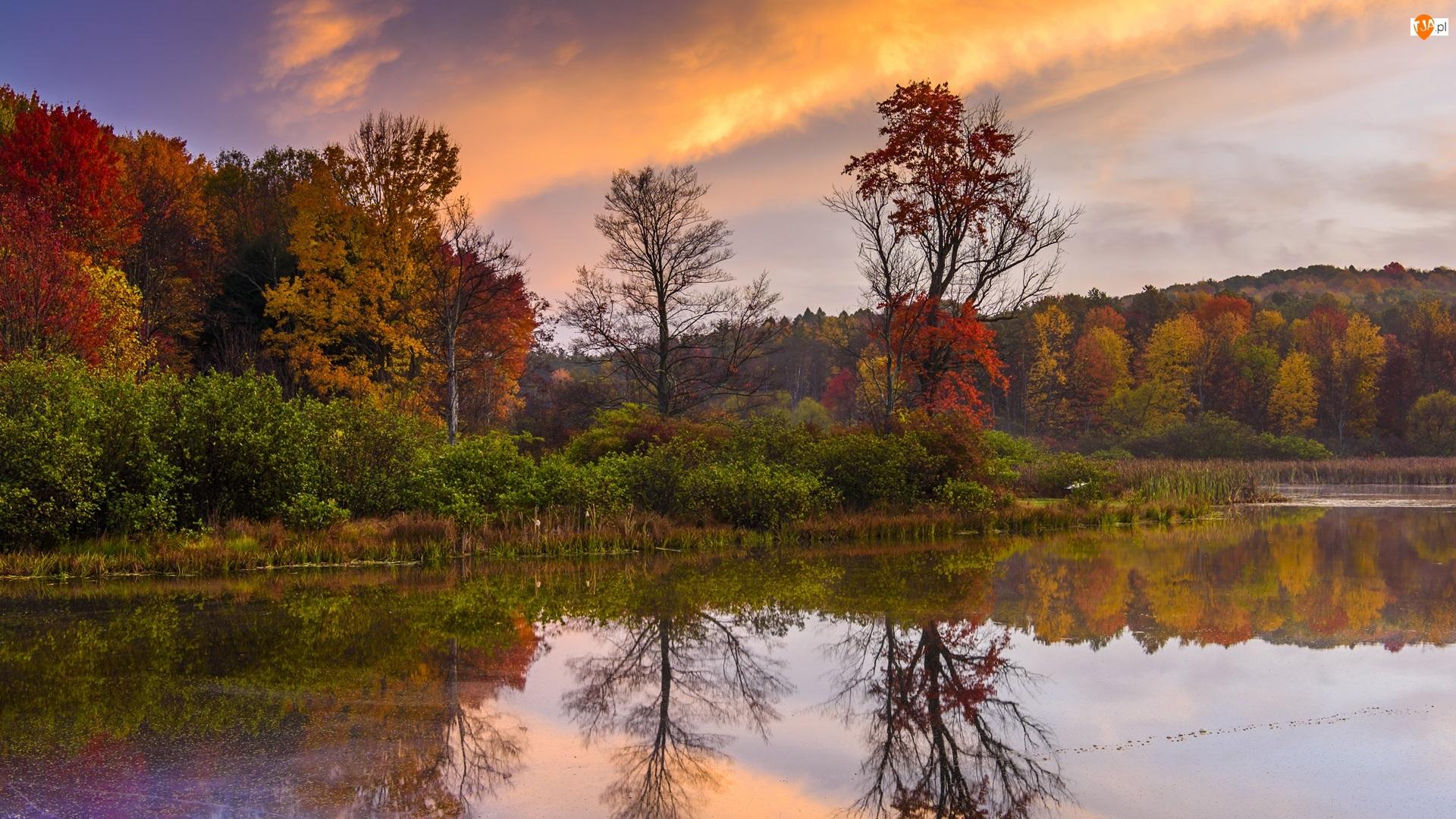 Drzewa, Jezioro, Roślinność, Wschód słońca, Krzewy, Jesień