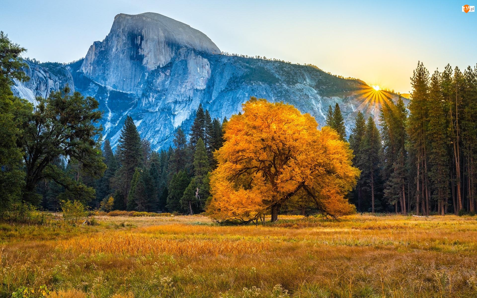 Promienie słońca, Jesień, Drzewa, Stan Kalifornia, Park Narodowy Yosemite, Las, Stany Zjednoczone, Góry