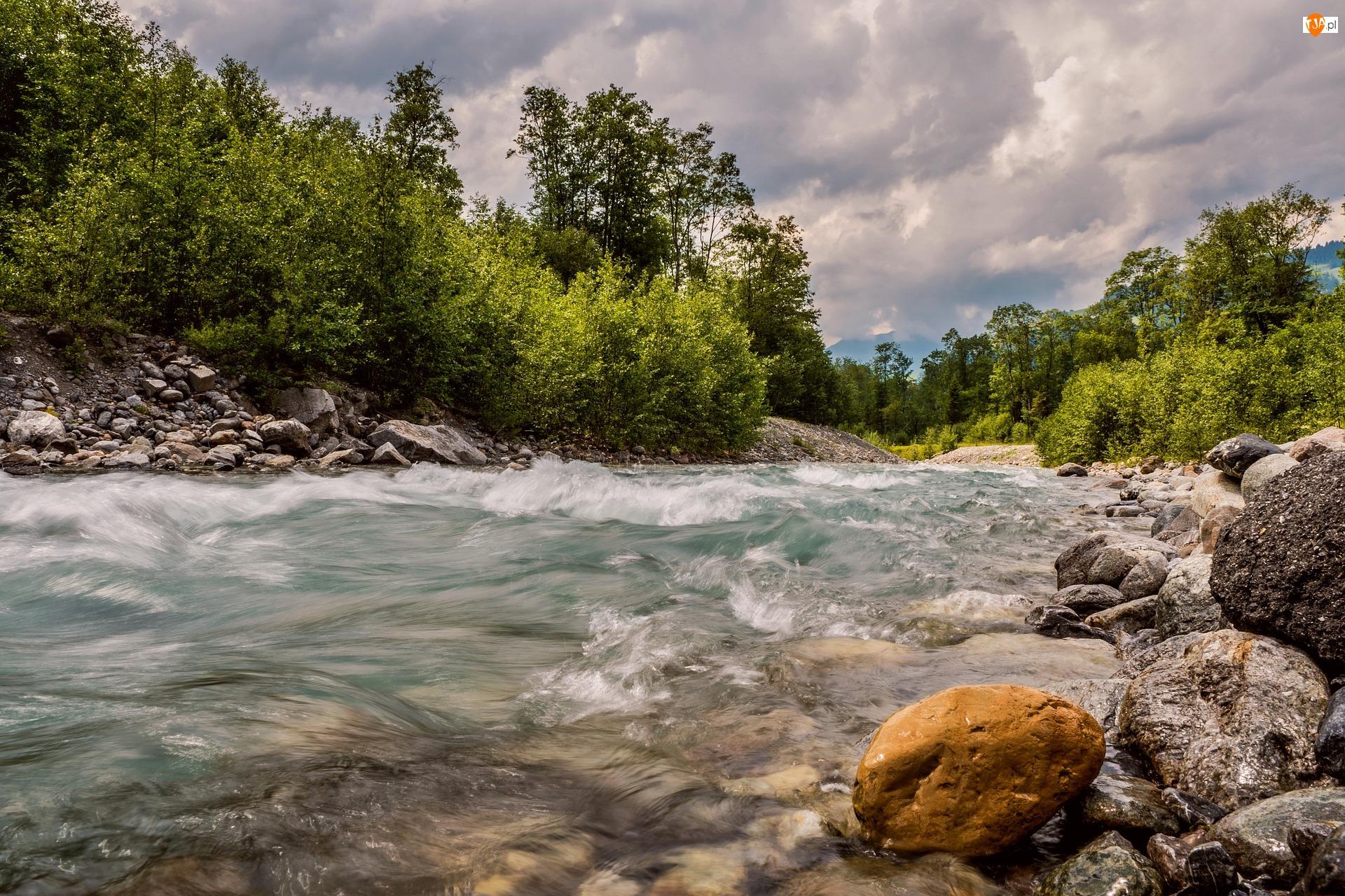 Drzewa, Rzeka, Kamienie, Zielone