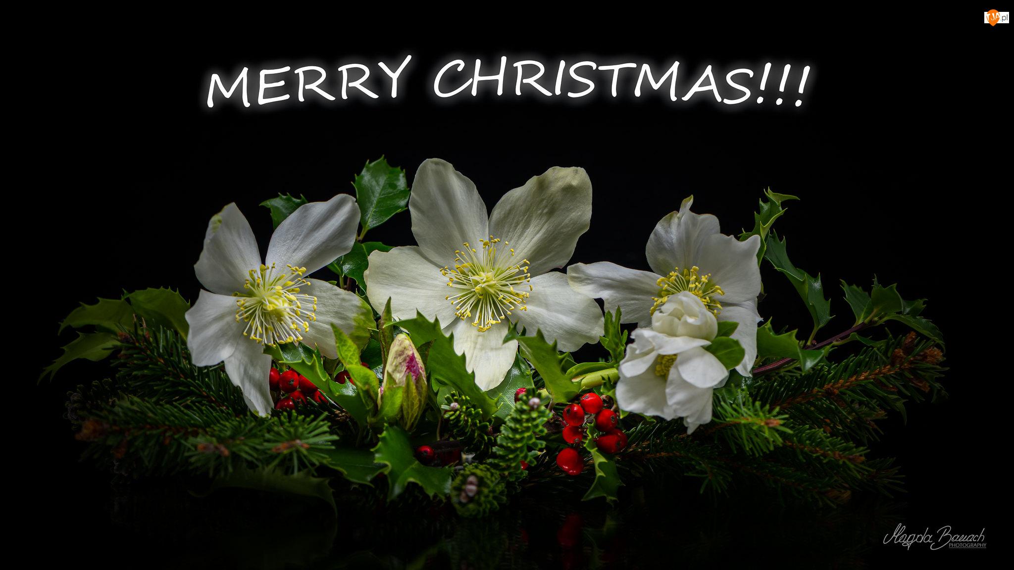 Stroik, Kwiaty, Czarne tło, Boże Narodzenie, Napis, Gałązki, Ciemierniki