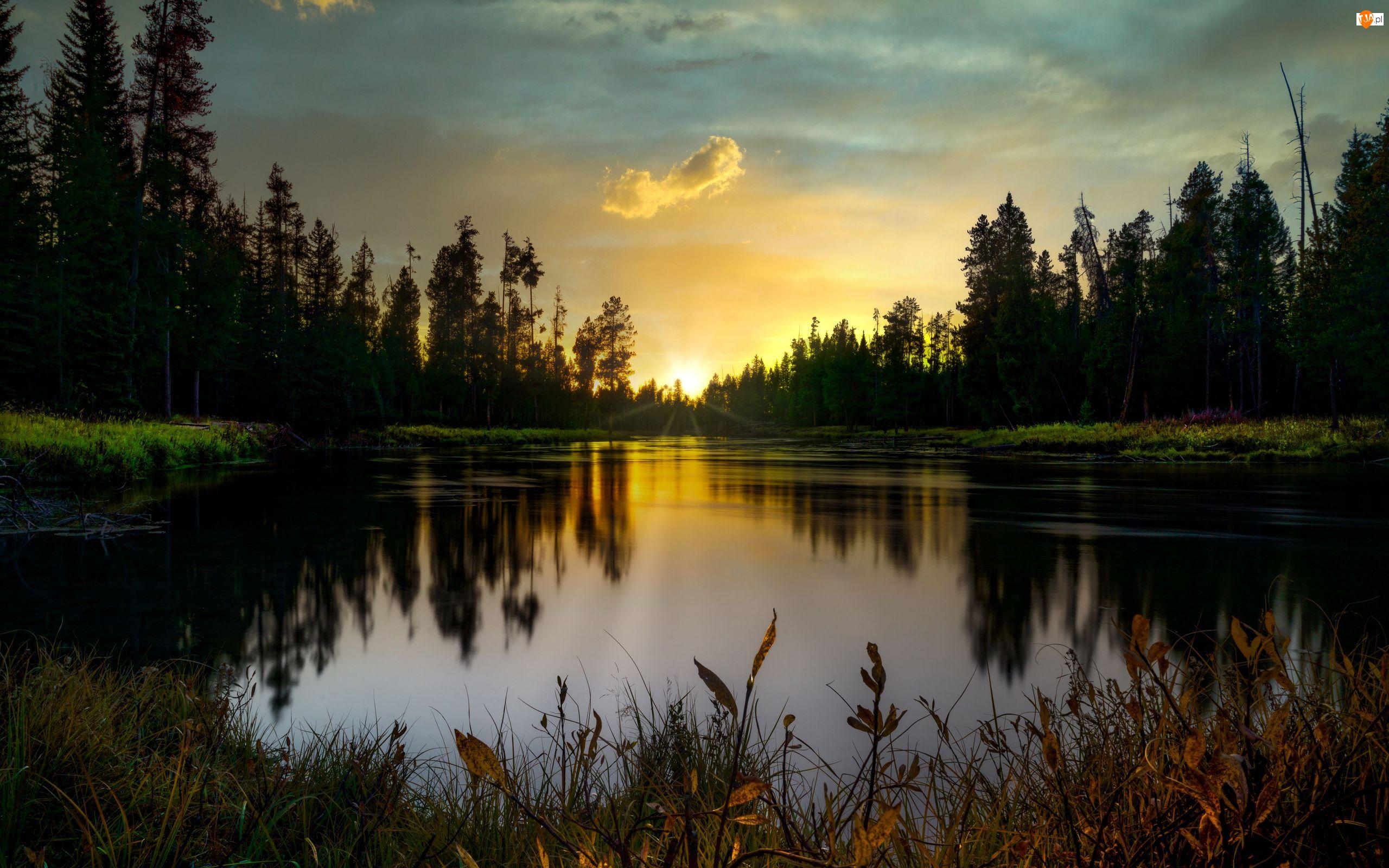 Las, Jezioro, Zachód słońca, Drzewa