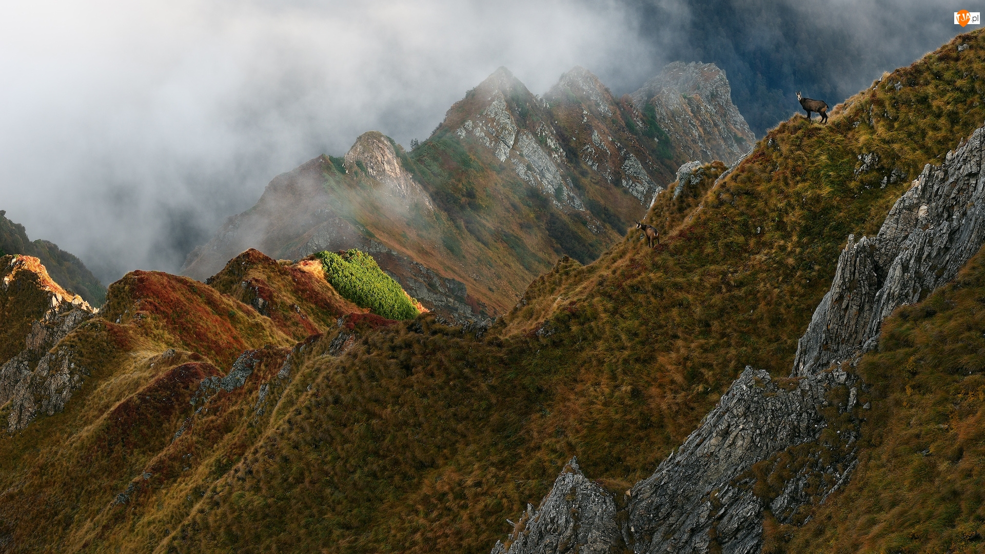 Skały, Kozy górskie, Mgła, Góry, Roślinność