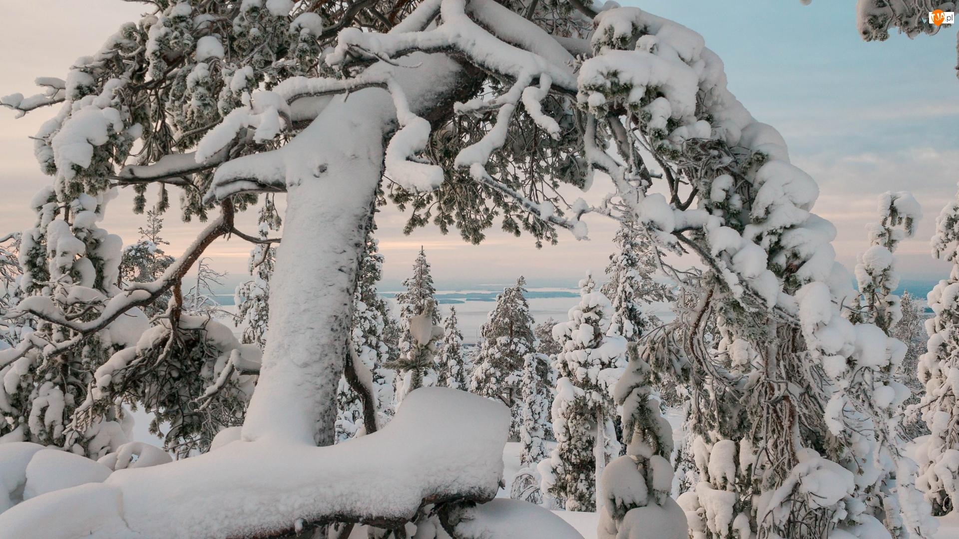 Śnieg, Zaśnieżone, Drzewa, Zima