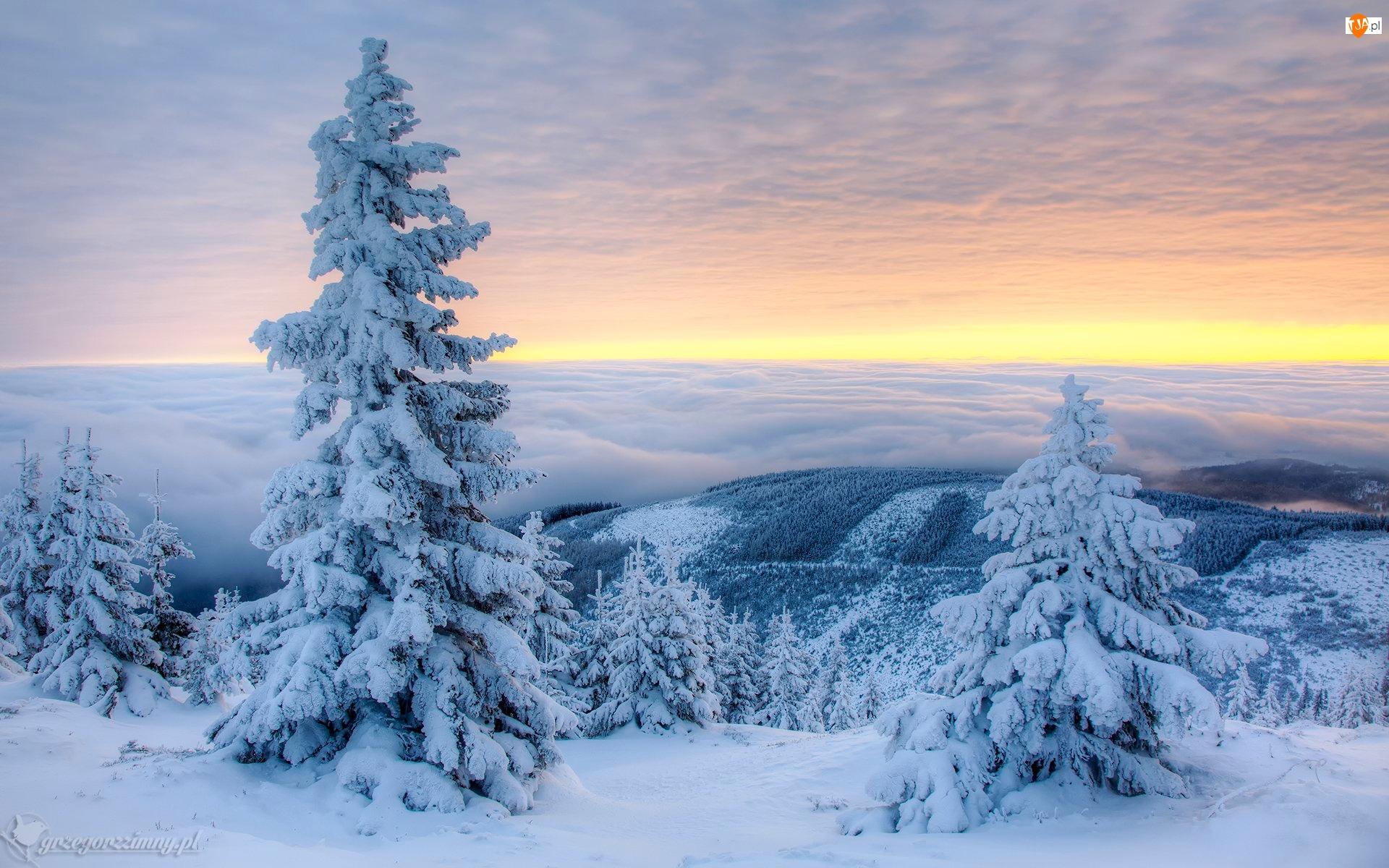 Mgła, Zima, Ośnieżone, Chmury, Śnieg, Drzewa, Góry, Świerki