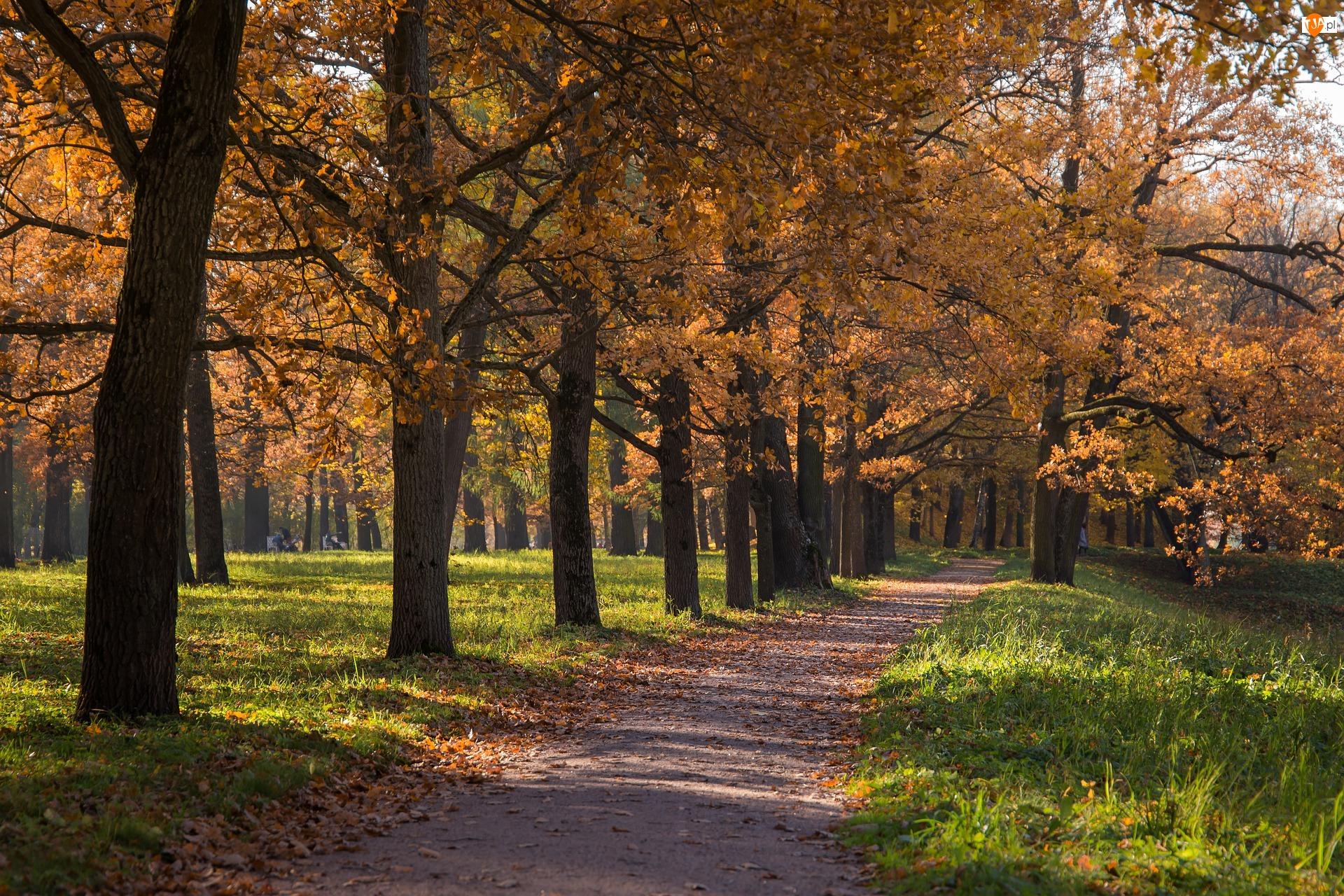 Park, Jesień, Drzewa, Trawa, Droga, Alejka