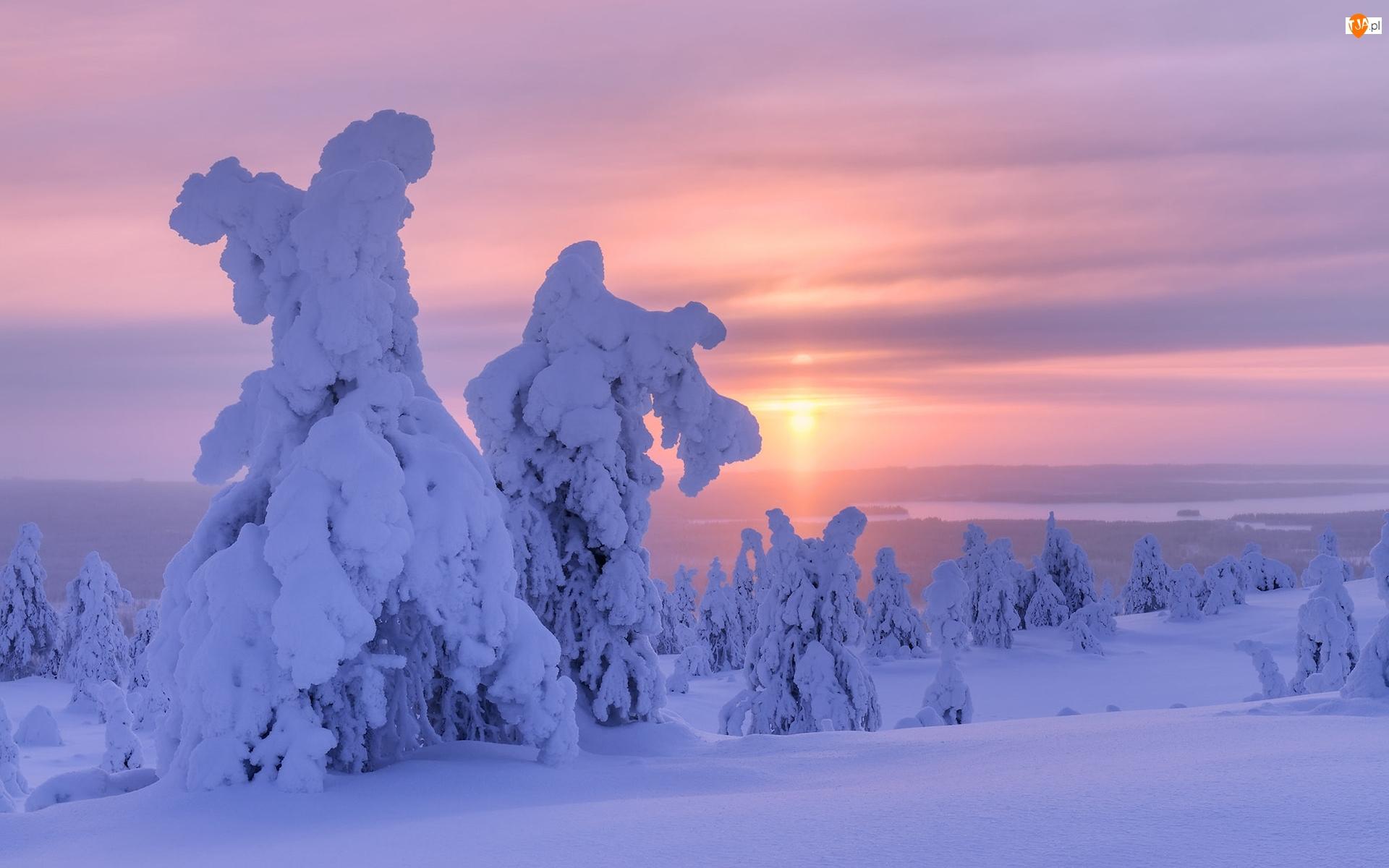 Drzewa, Niebo, Zaśnieżone, Zima, Wschód słońca