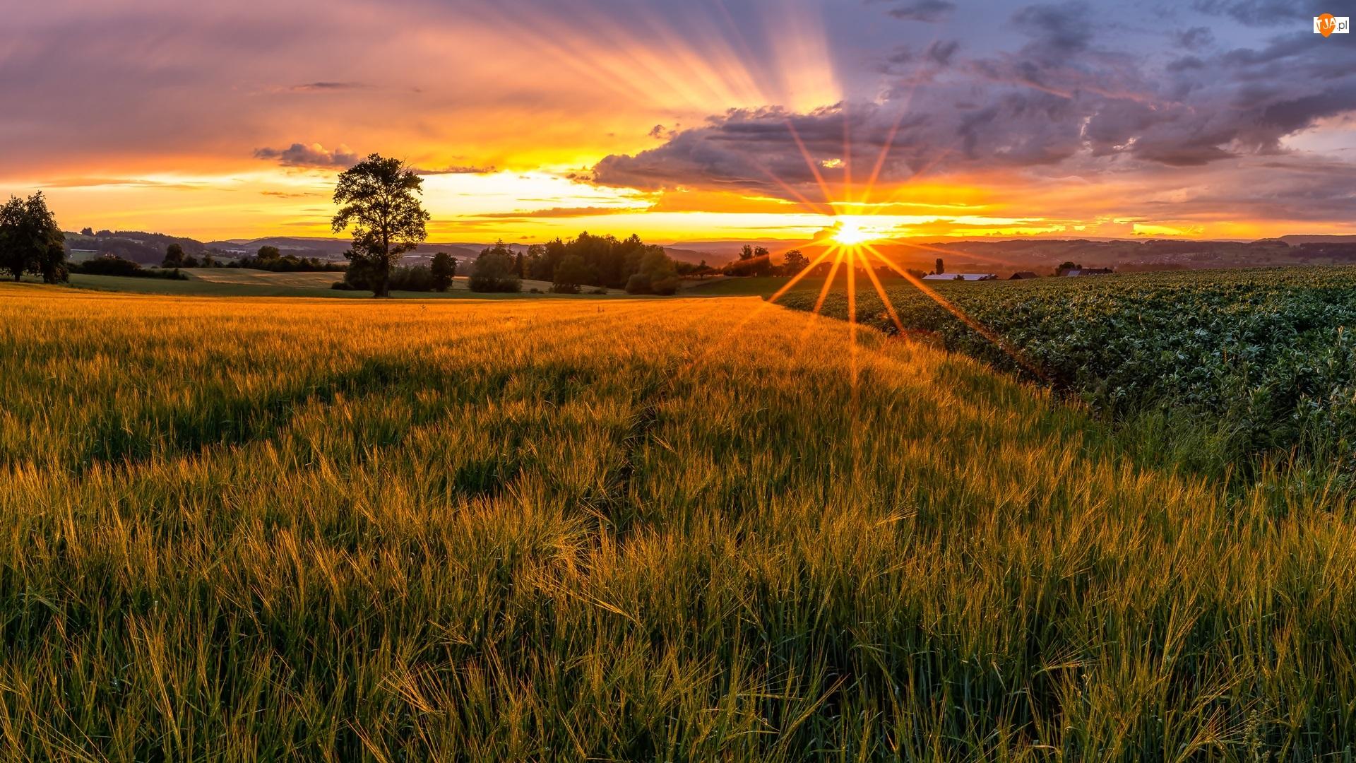Chmury, Pola, Drzewa, Promienie słońca