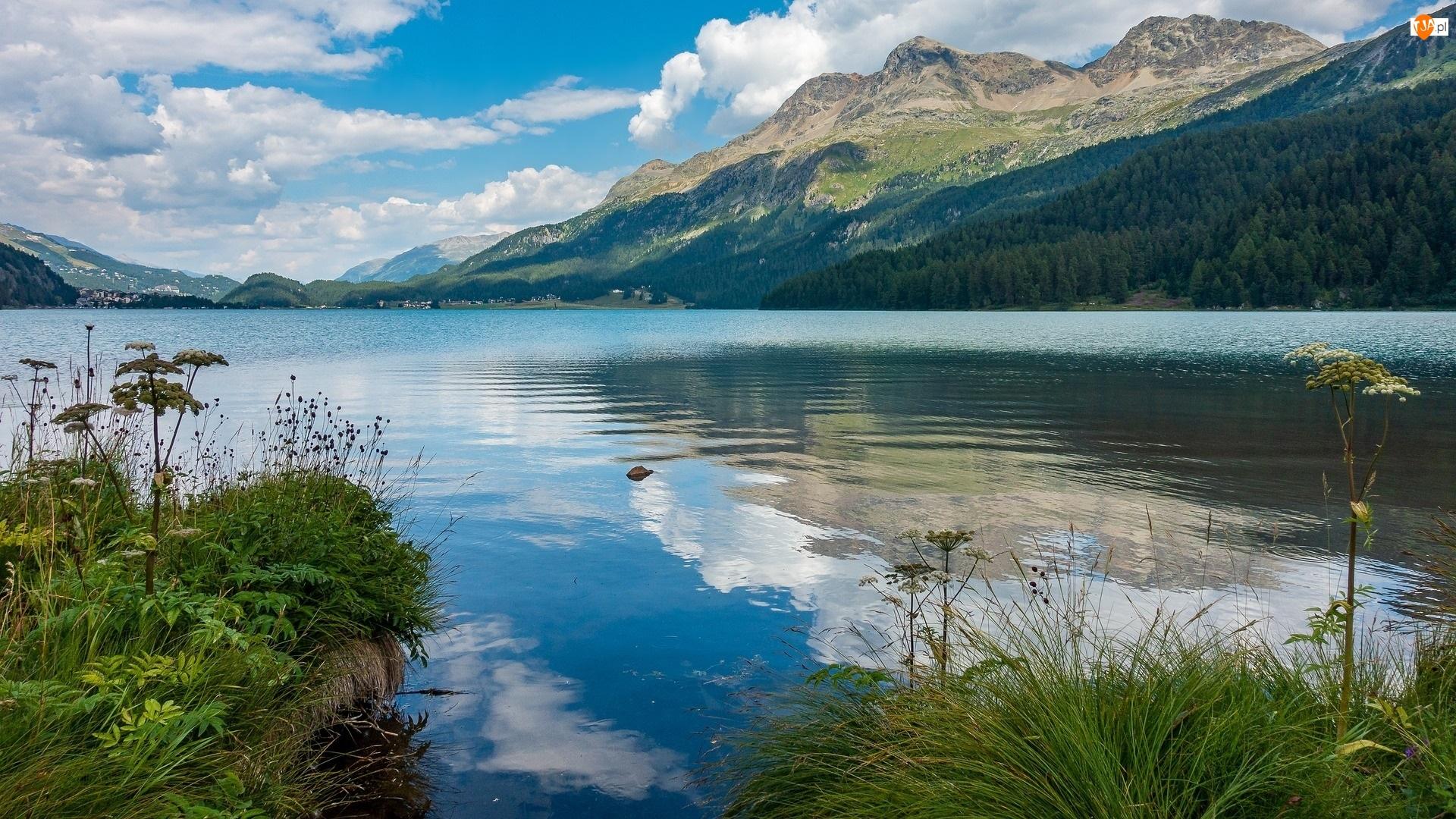Jezioro, Góry, Rośliny, Szwajcaria, Silsersee, Trawa
