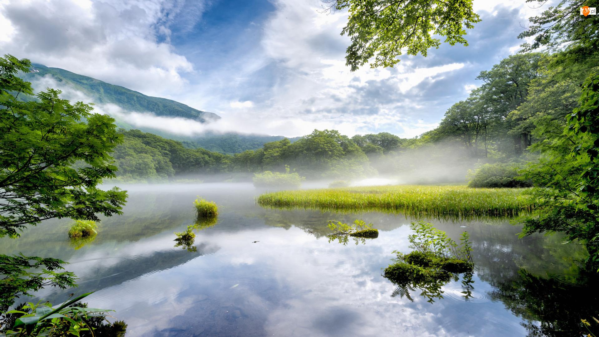 Mgła, Odbicie, Trawy, Drzewa, Jezioro, Poranek, Brzeg